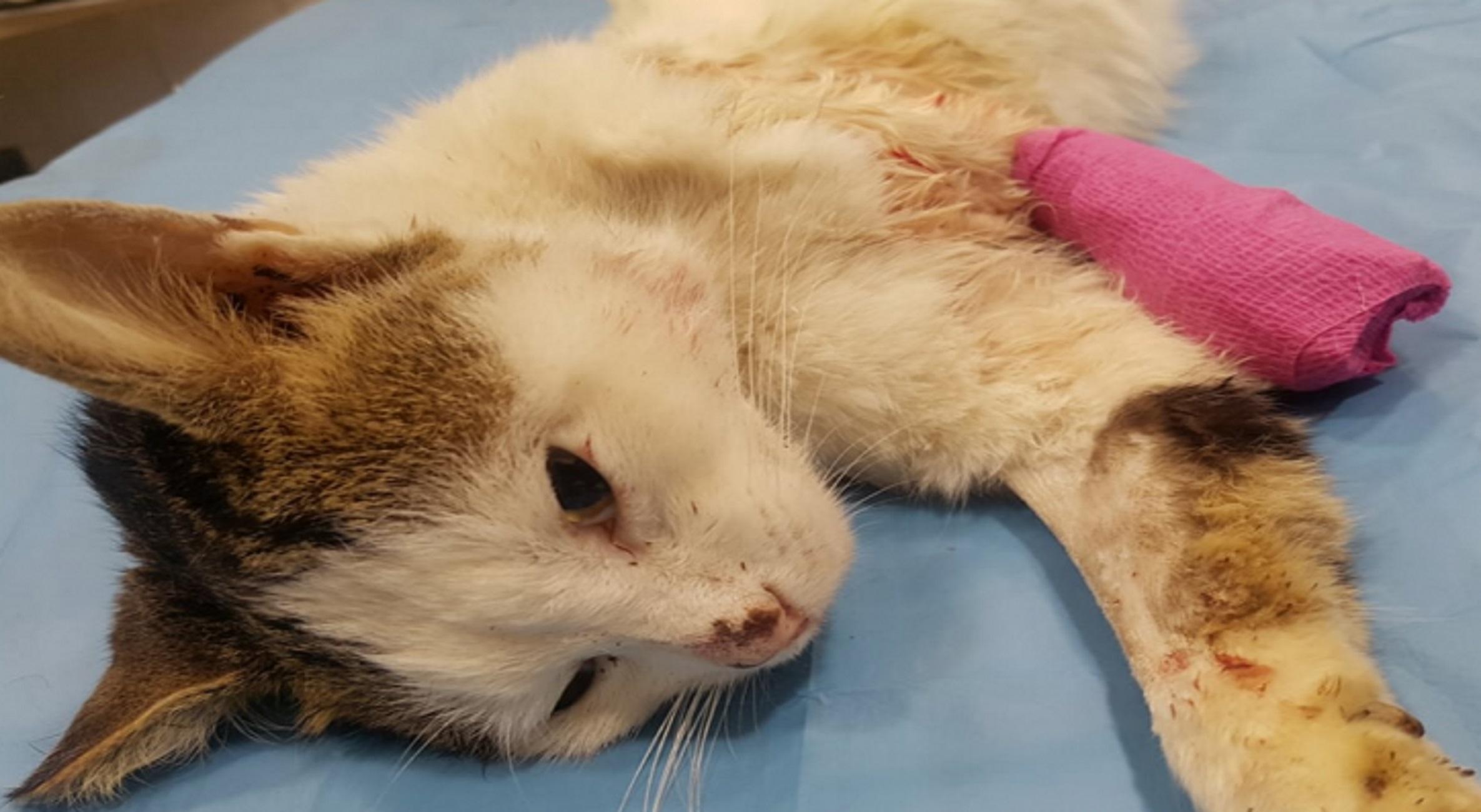 Λαμία: Περπατάει ξανά ο γάτος της αδιανόητης κτηνωδίας – Ο Περσέας τα κατάφερε με πρόσθετα μέλη