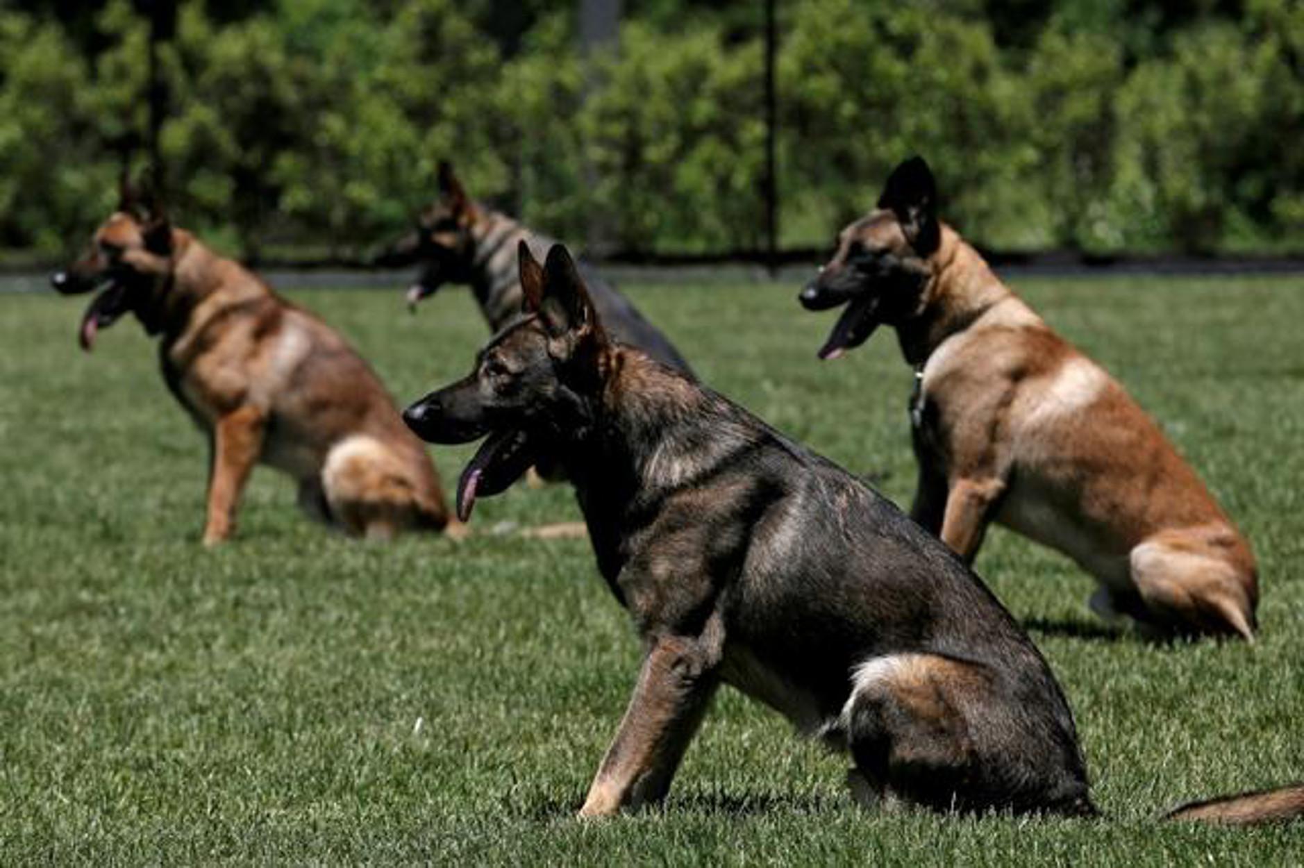 Ψάχνουν σπίτι για σκύλους της αστυνομίας επειδή… παραείναι ήπιοι και φιλικοί!