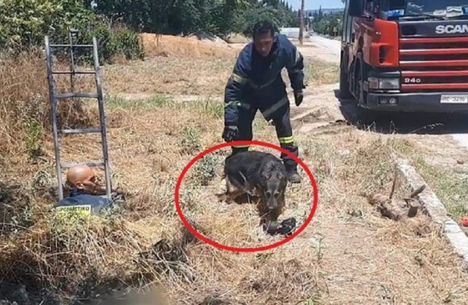 Θεσσαλονίκη: Διάσωση σκύλου στην κάμερα – Έπεσε και παγιδεύτηκε μέσα σε φρεάτιο στην Καλαμαριά