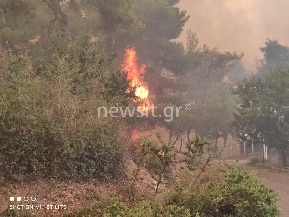 Φωτιά στην Σταμάτα: Μήνυμα από το 112 στους κατοίκους της Βόρειας Αττικής