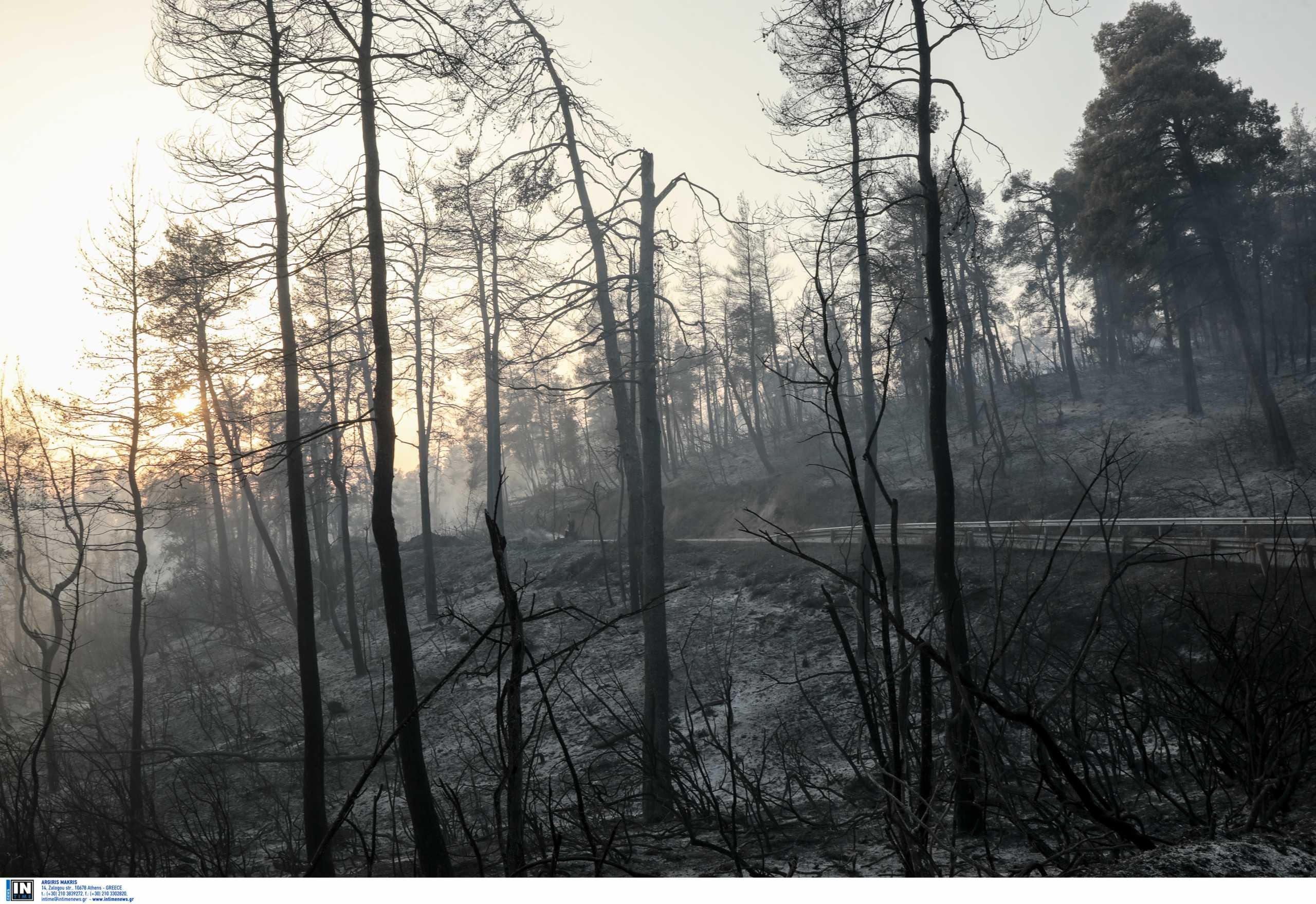 Υποχρεωτικά αναδασωτέες όλες οι καμένες εκτάσεις σύμφωνα με την ΠΝΠ μετά τις πυρκαγιές