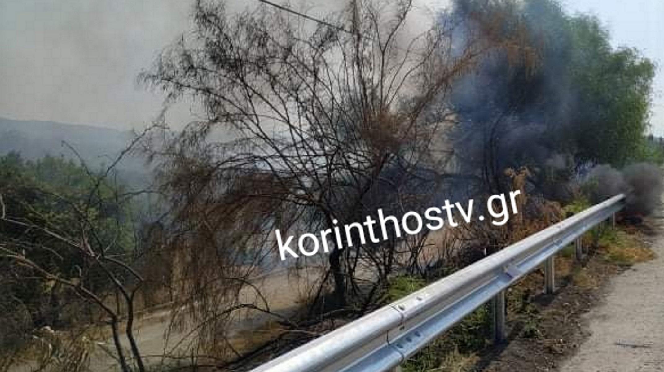 Φωτιά στην Κορινθία: Καίγονται δέντρα και ξερά χόρτα στα Αγιαννιώτικα