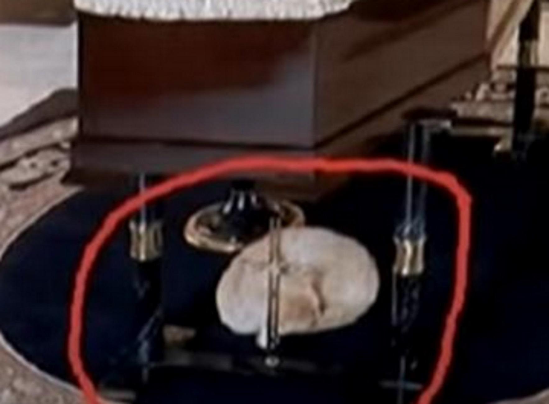 Ηράκλειο: Το γατάκι που μοιράζεται τον πόνο συγγενών σε κηδείες – Δείτε τις απίστευτες εικόνες