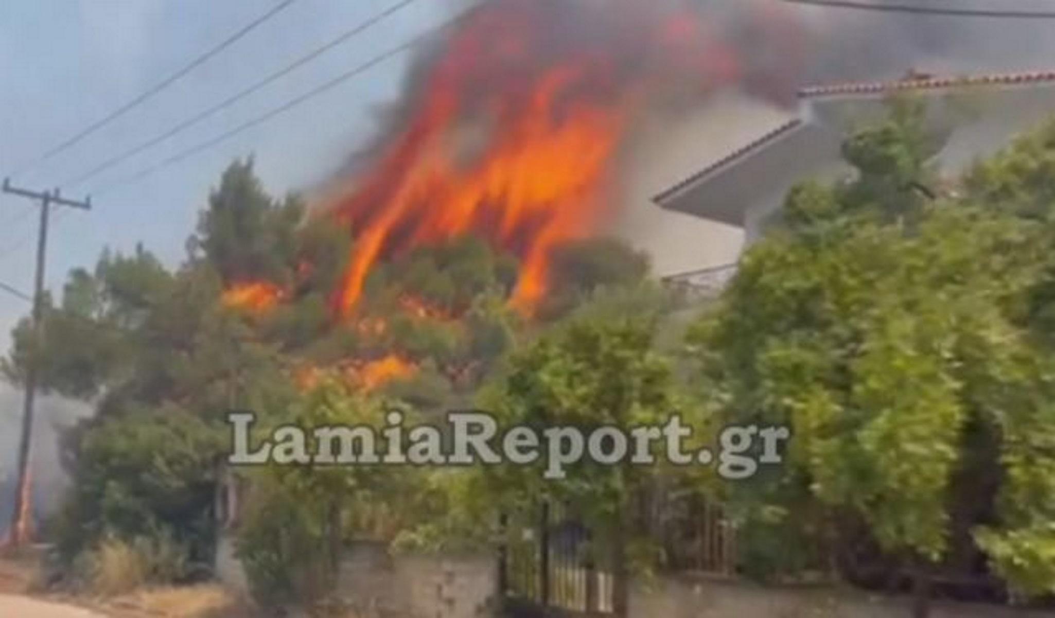 Φωτιές στον Θεολόγο: Ανακρίνεται ένας 14χρονος  για μπαράζ εμπρησμών στην περιοχή