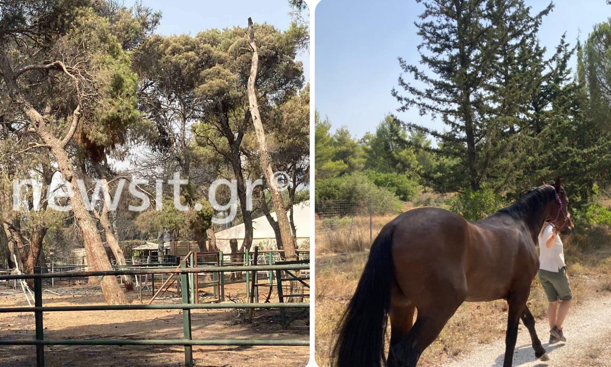 Φωτιά στην Βαρυμπόμπη: Κάηκε ο Ιππικός Όμιλος – Ασφαλή και τα 52 άλογα