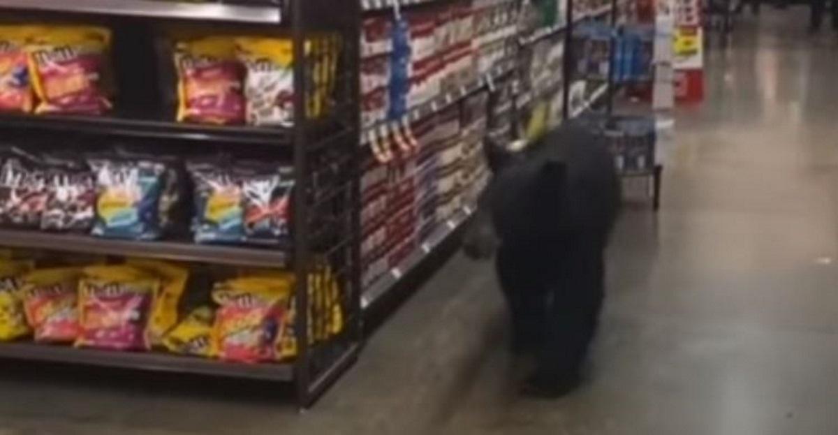Viral βίντεο: Αρκούδα μπήκε σε σούπερ μάρκετ στο Λος Άντζελες να «ψωνίσει»