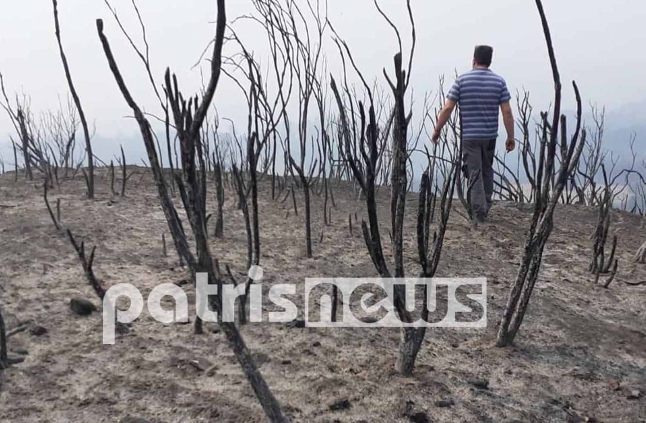 Στάχτη και σιωπή: Η επόμενη μέρα στην Αχλαδινή μετά το πέρασμα της φωτιάς