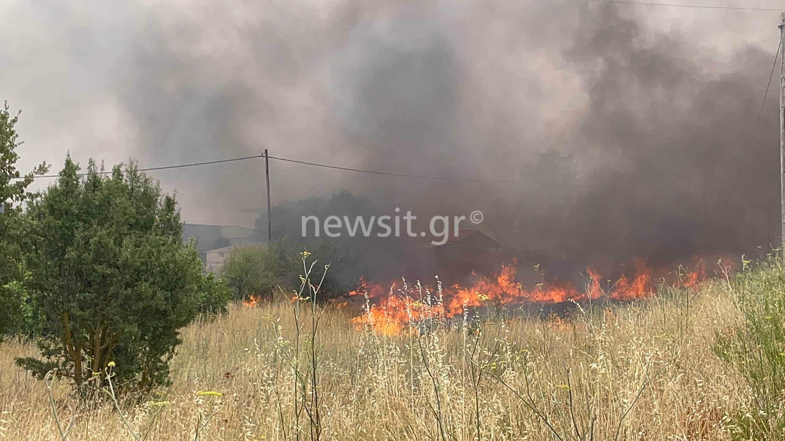 Φωτιά στην Αττική: Μεγάλες αναζωπυρώσεις στις Αφίδνες – Τρομακτικές εικόνες από επιχειρήσεις που καίγονται