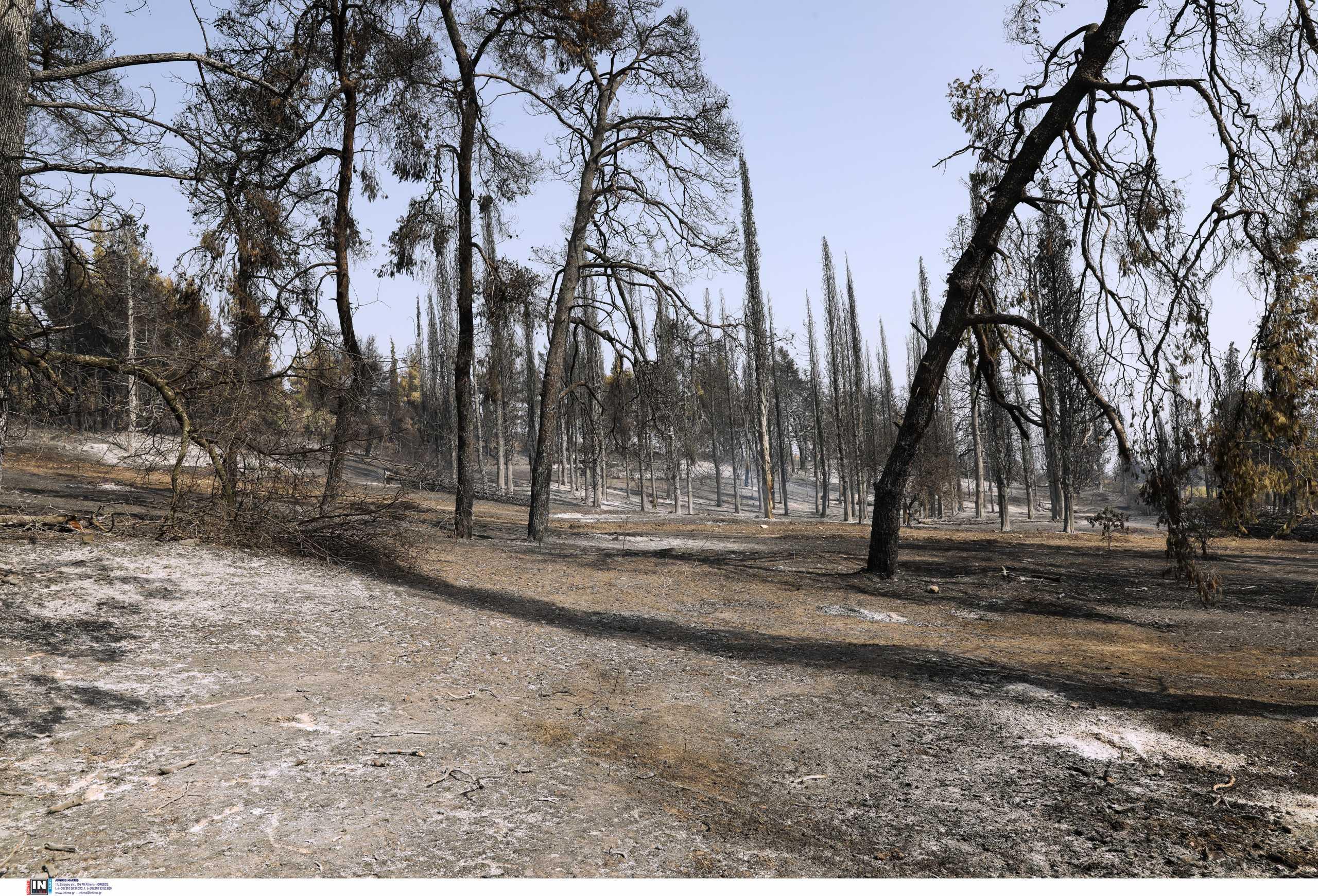 Φωτιά στην Εύβοια: Καίει ανεξέλεγκτα σε τέσσερα μέτωπα