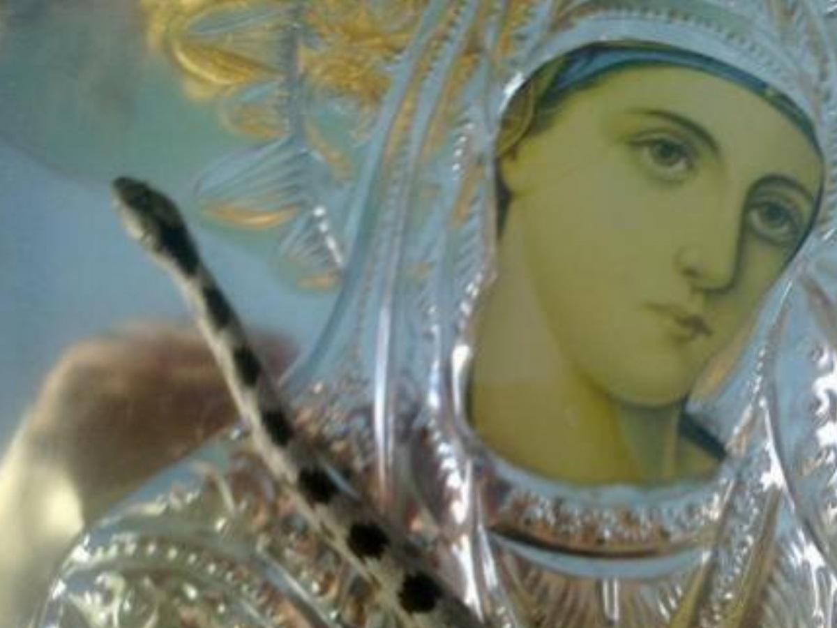 Κεφαλονιά: Τί συμβαίνει με τα φιδάκια της Παναγίας που εμφανίζονται από 6 έως 15 Αυγούστου;