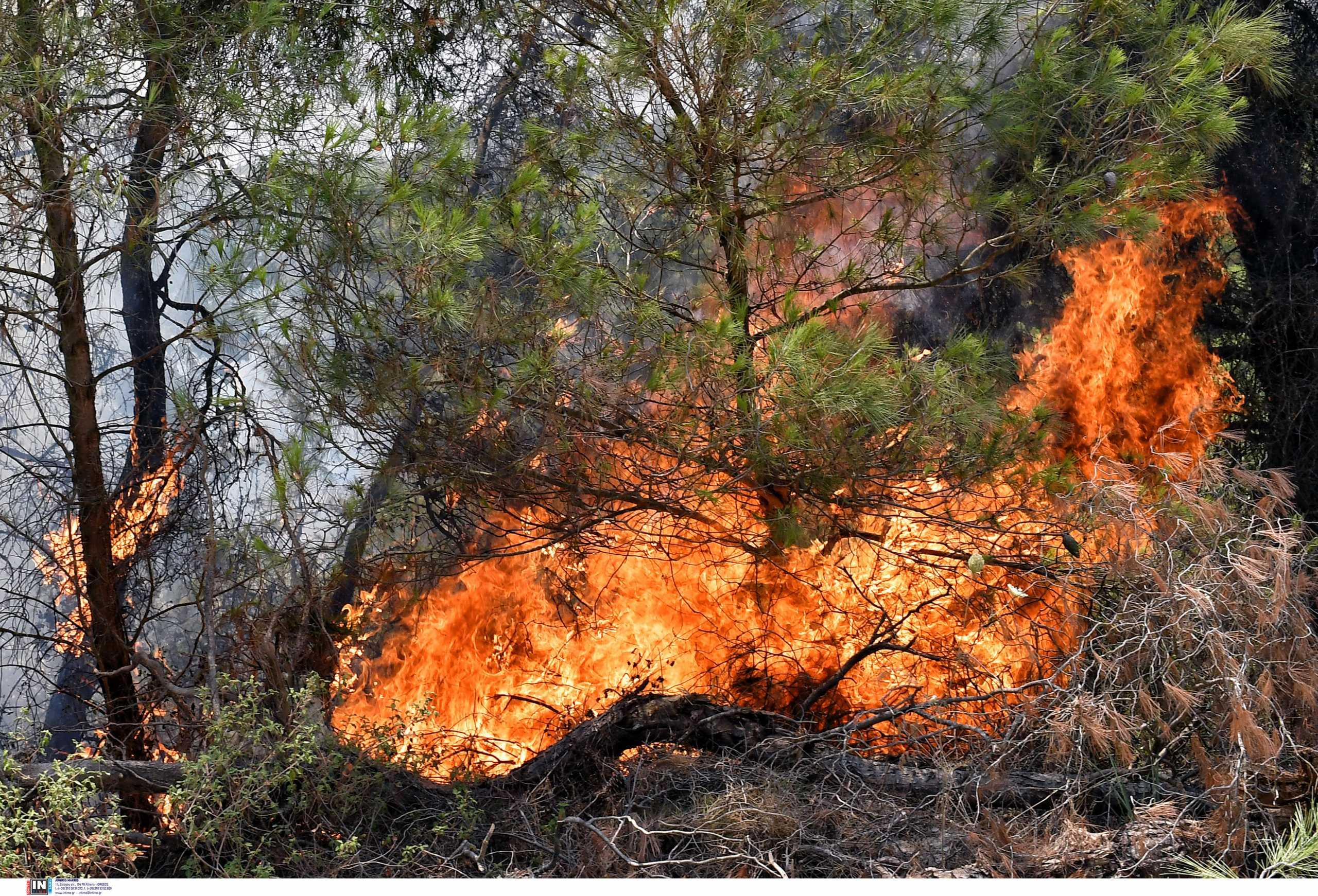 Φωτιά στην Ηλεία: Έρευνες για επίδοξο εμπρηστή στη Λαμπεία