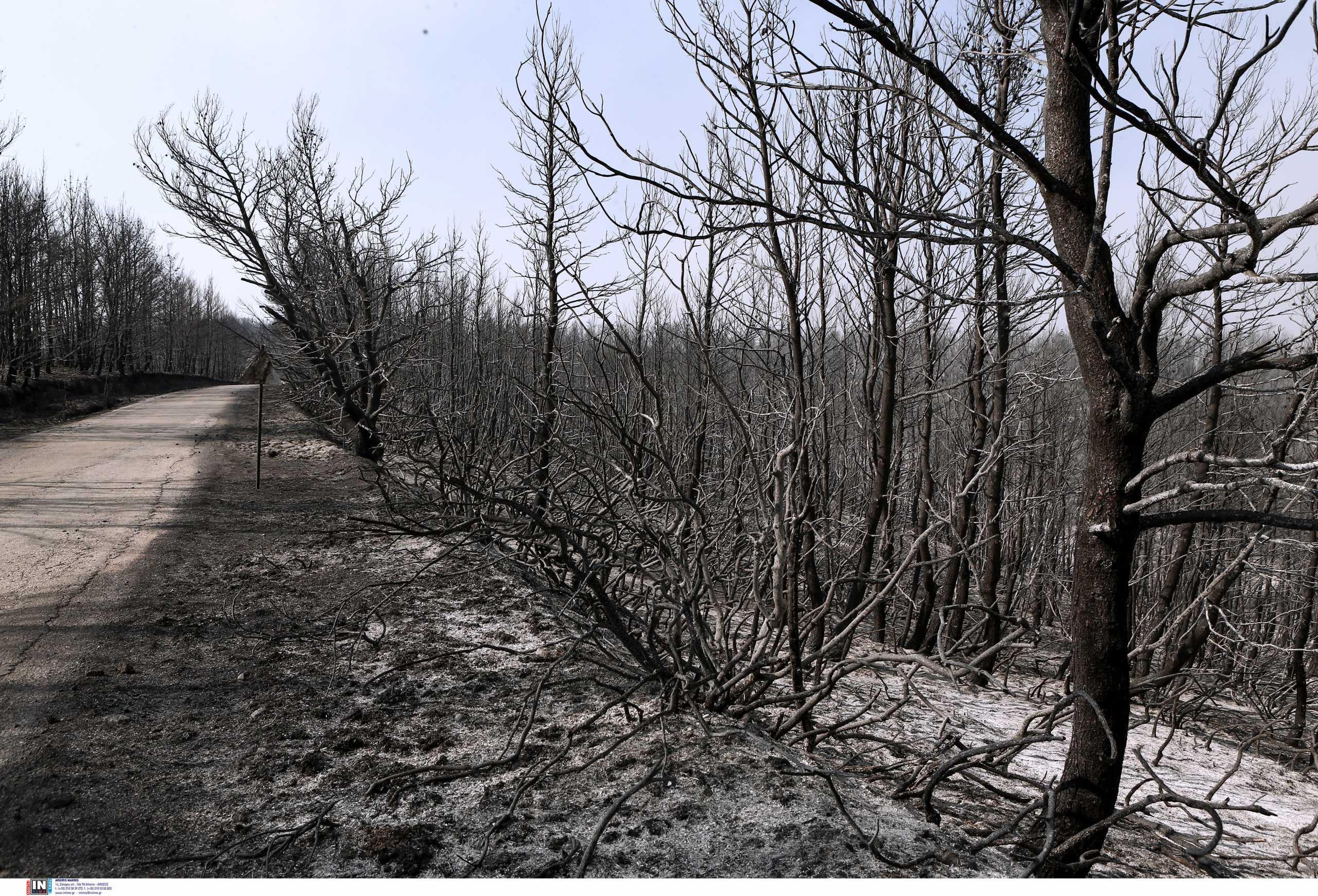 Φωτιές: Περισσότερα από ένα εκατομμύριο στρέμματα κάηκαν μέσα σε δύο εβδομάδες