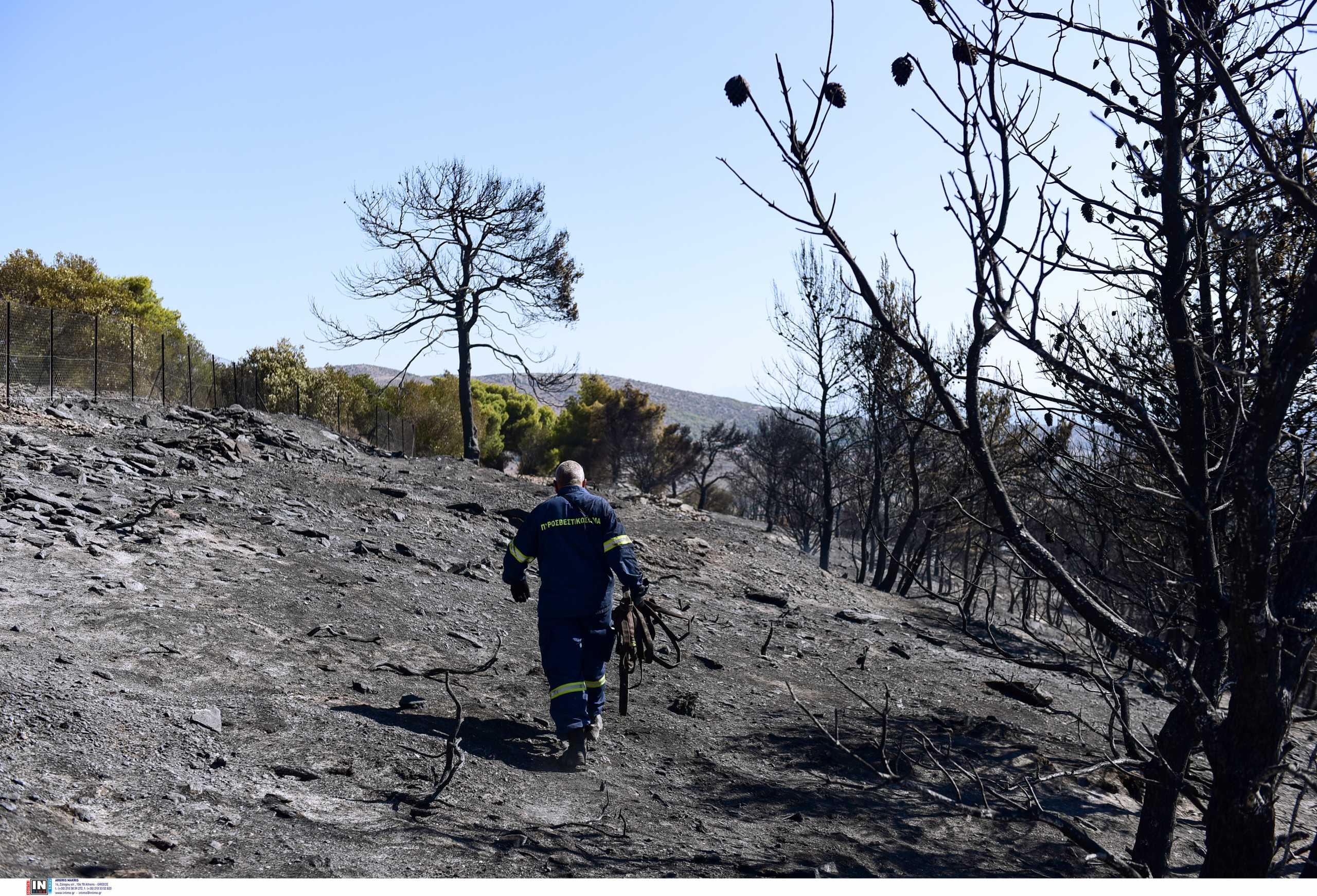 Βόρεια Εύβοια: Η ΔΕΗ θα συνεισφέρει στην αποκατάσταση και στην αναδάσωση στις πυρόπληκτες περιοχές