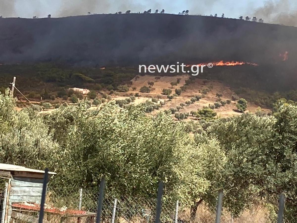 Φωτιά στην Κερατέα: Πάλι κοντά σε σπίτια οι φλόγες – Αγωνία μην περάσει στην Συντερίνα και τον Άγιο Κωνσταντίνο