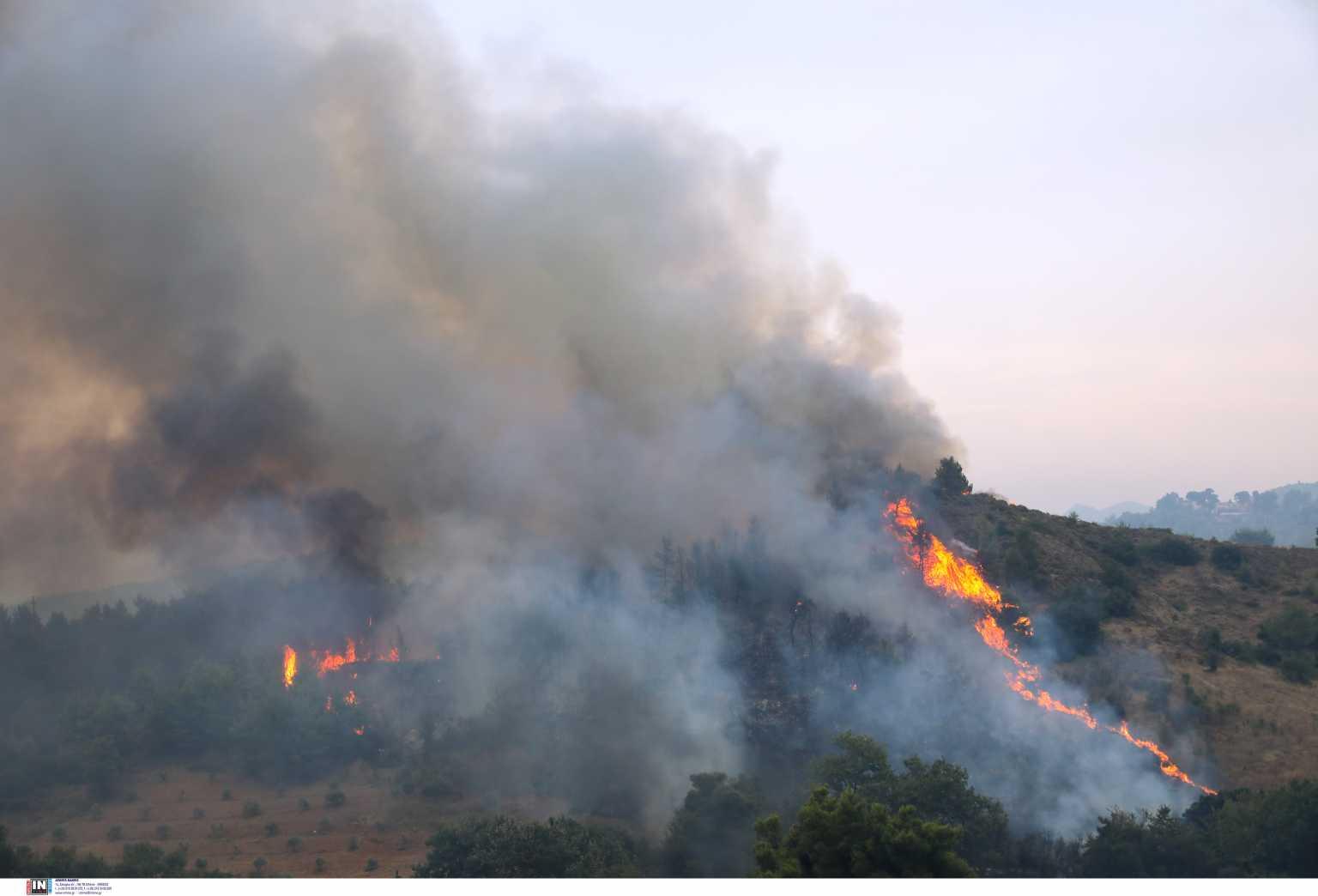Φωτιά τώρα στην Άμφισσα – Ισχυρές δυνάμεις στην περιοχή