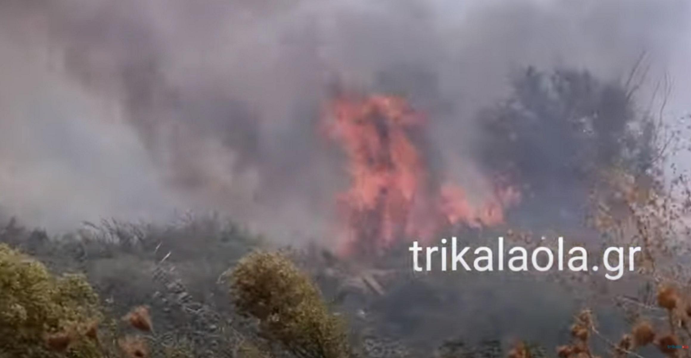 Φωτιά στα Τρίκαλα: Πυκνοί καπνοί σκέπασαν το Μικρό Κεφαλόβρυσο – Δέντρα τυλίχτηκαν στις φλόγες