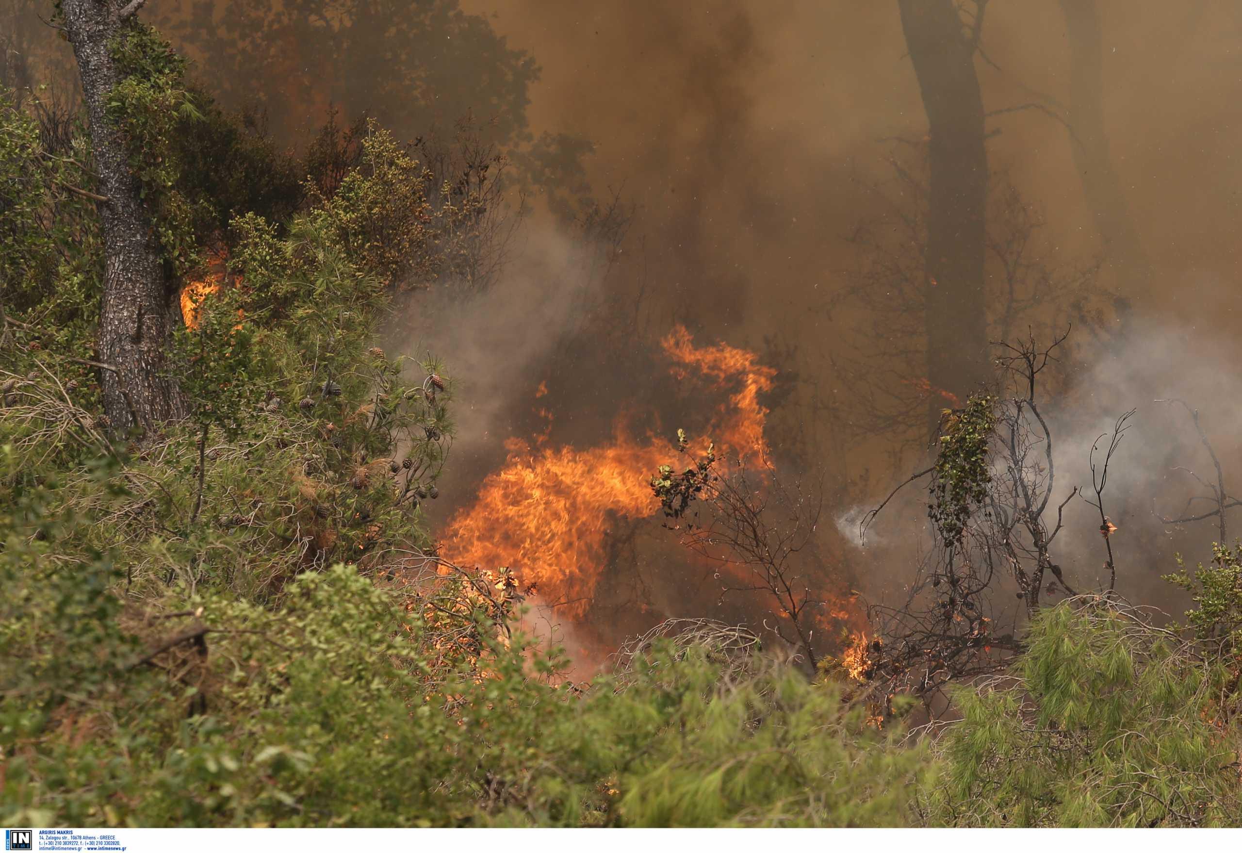 Αλέξης Τσίπρας για φωτιές στην Εύβοια: Ως πότε θα συνεχίζεται αυτό το δράμα;