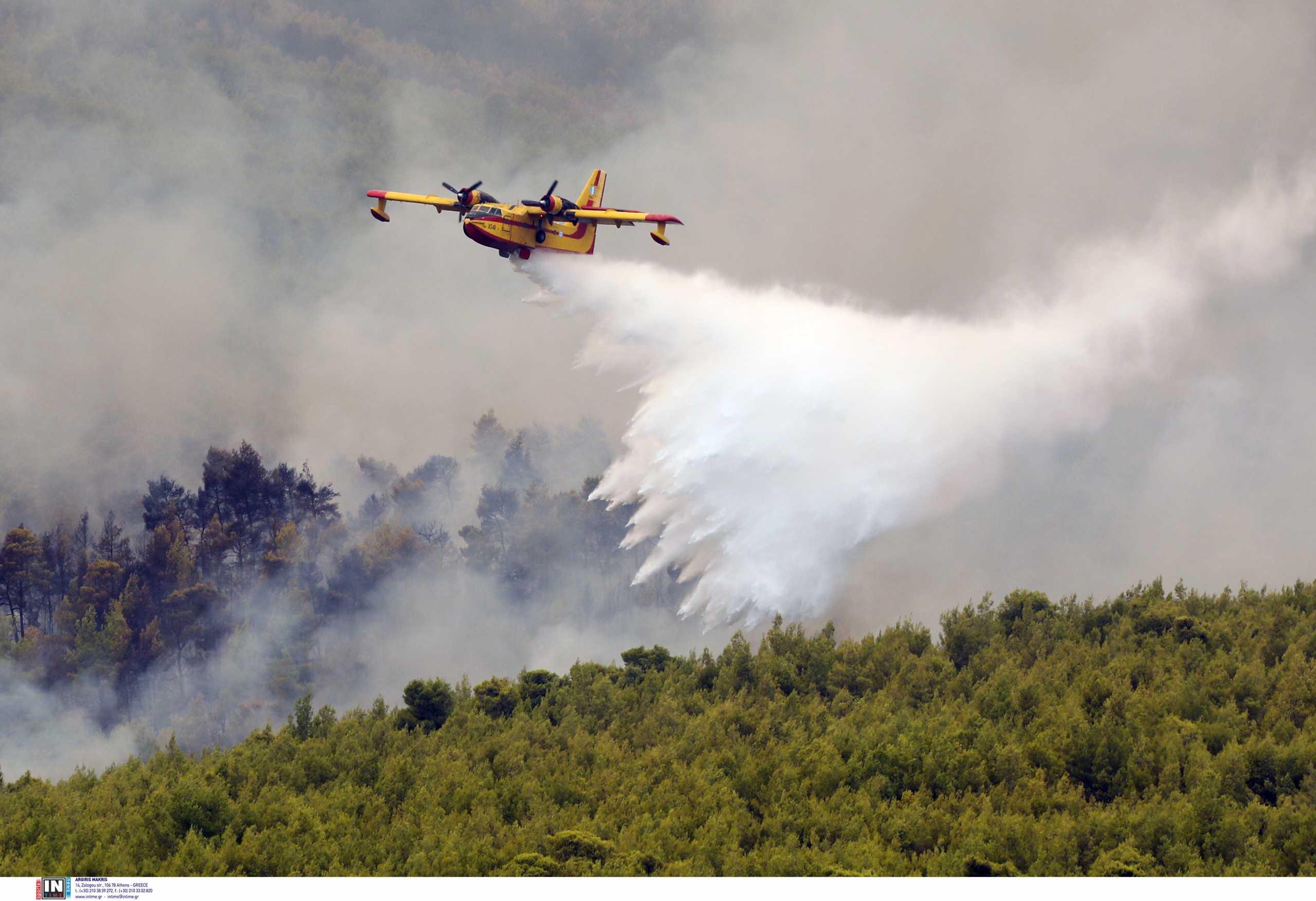 Φωτιά σε δάσος στο Κιλκίς – Μεγάλη επιχείρηση της πυροσβεστικής