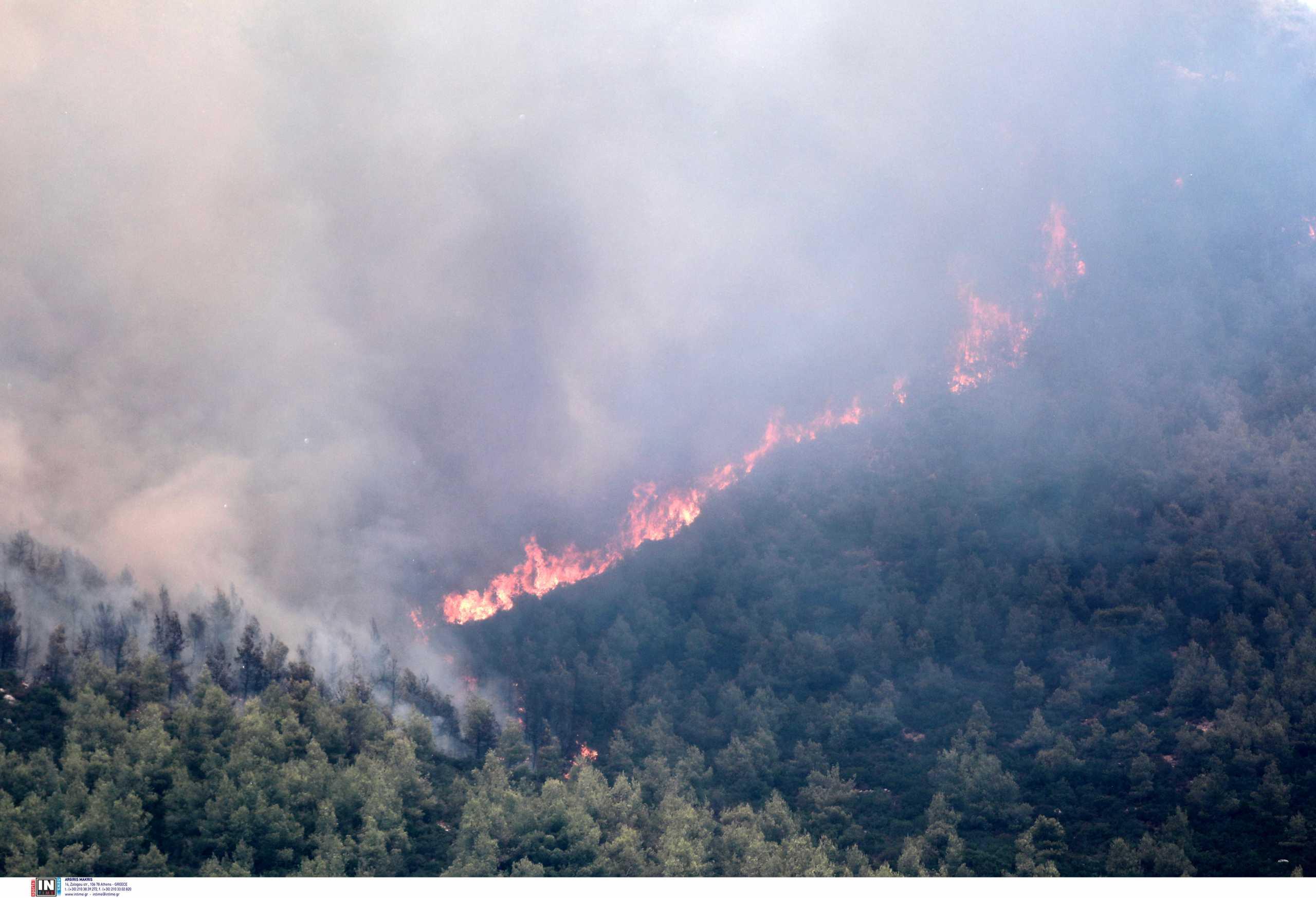 Φωτιά στα Βίλια: Τεράστιο το μέτωπο της πυρκαγιάς, μάχη να μη φτάσει στην Οινόη