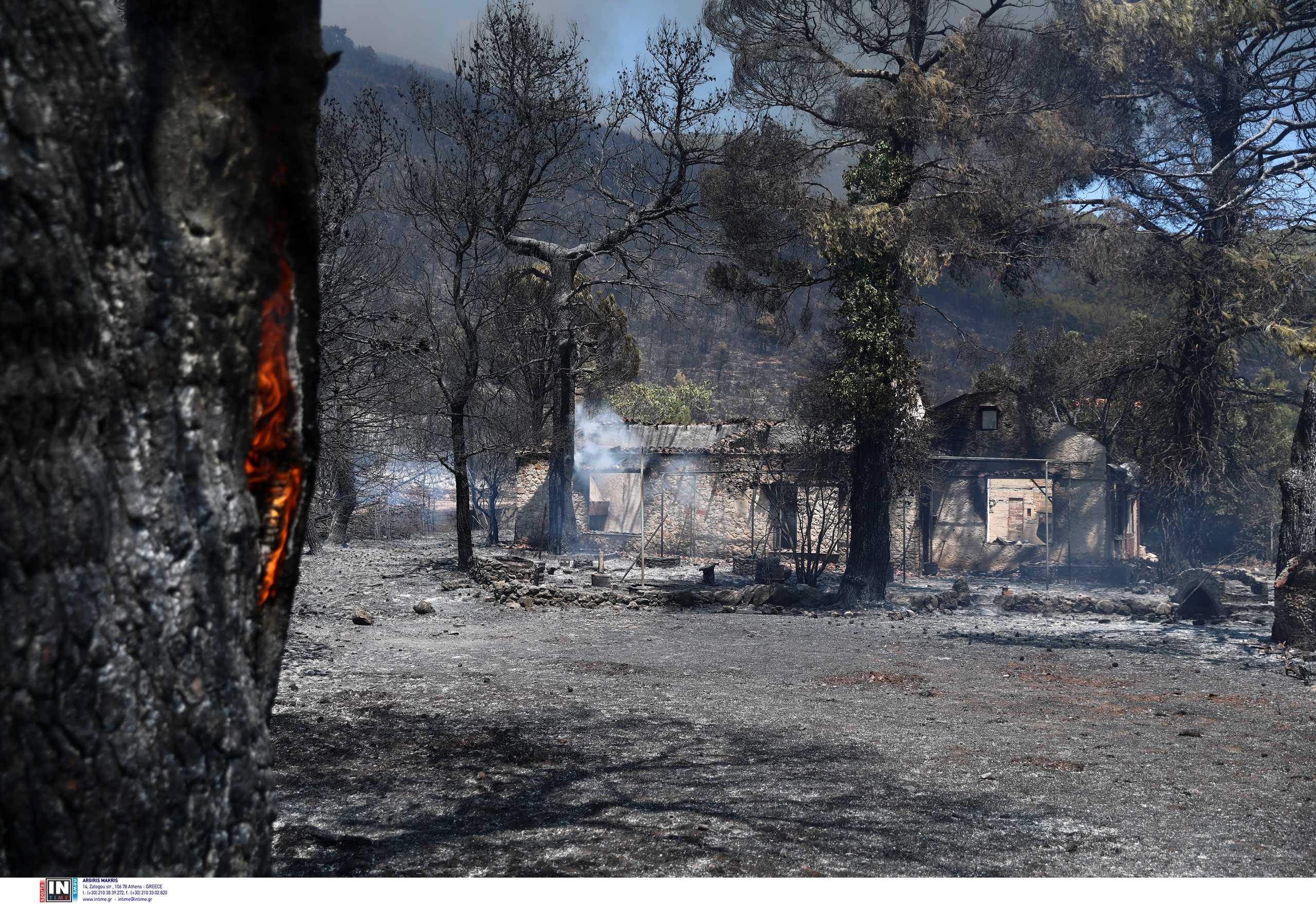 Φωτιά στα Βίλια: Ενεργό μέτωπο μέσα στο δάσος – Στάχτη πάνω από 80.000 στρέμματα