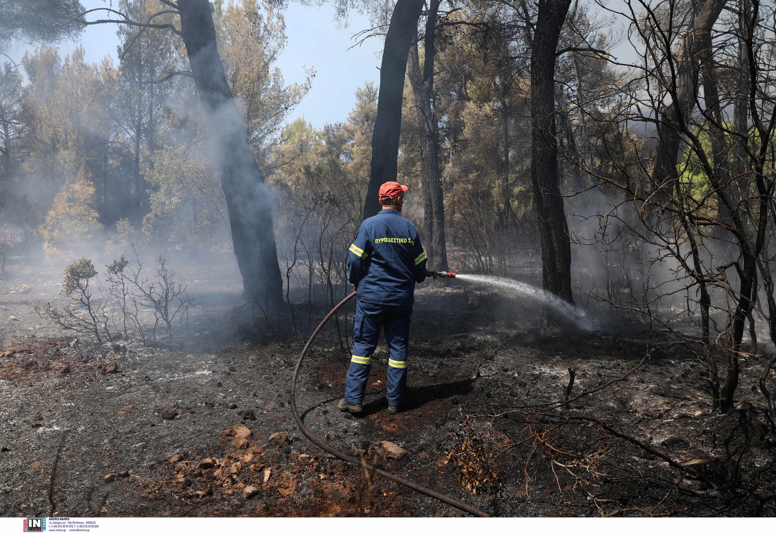 Φθιώτιδα: Συναγερμός για φωτιά κοντά στα διόδια Πελασγίας – Οι πυροσβέστες πρόλαβαν τα χειρότερα