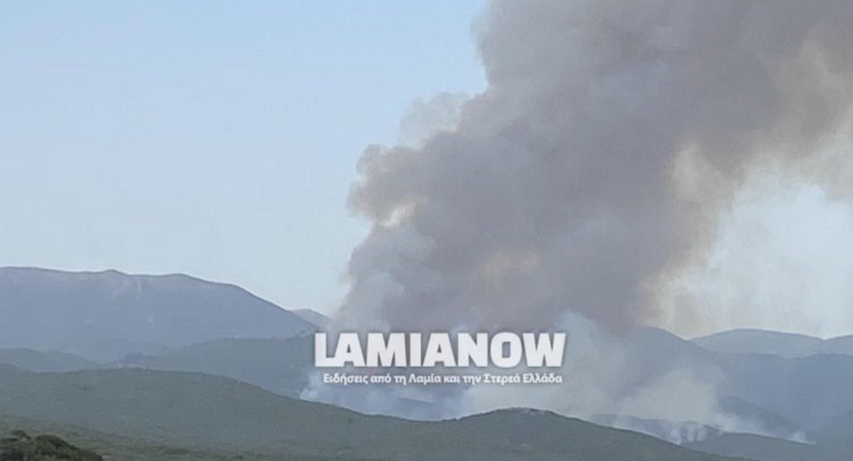 Φωτιά στη Φθιώτιδα: Στις φλόγες δάσος στο Λογγίτσι