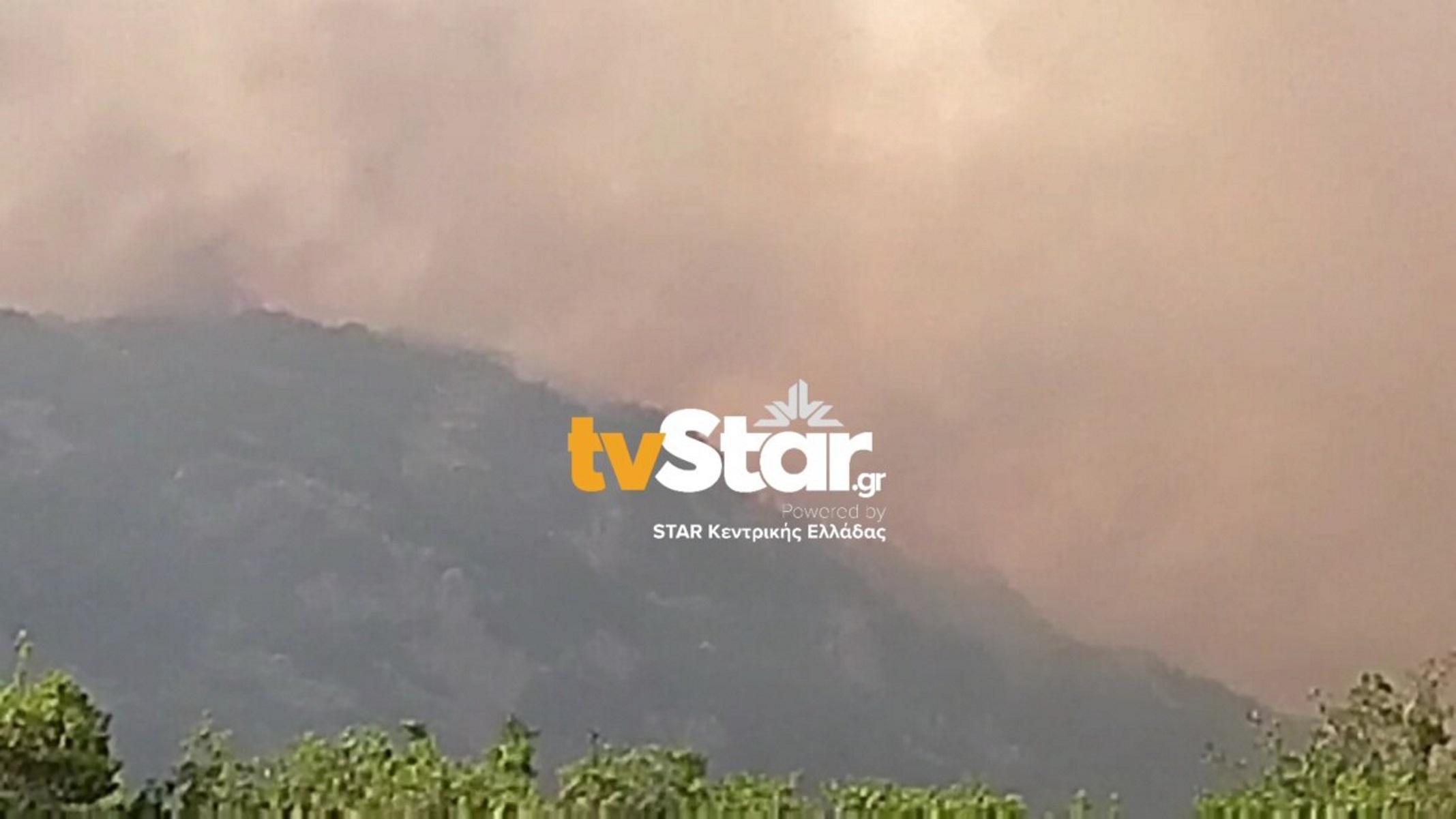 Φωτιά στη Φθιώτιδα: Σκληρή μάχη με τα μέτωπα έξω από το χωριό Λογγίτσι – Εκκενώθηκε ο οικισμός