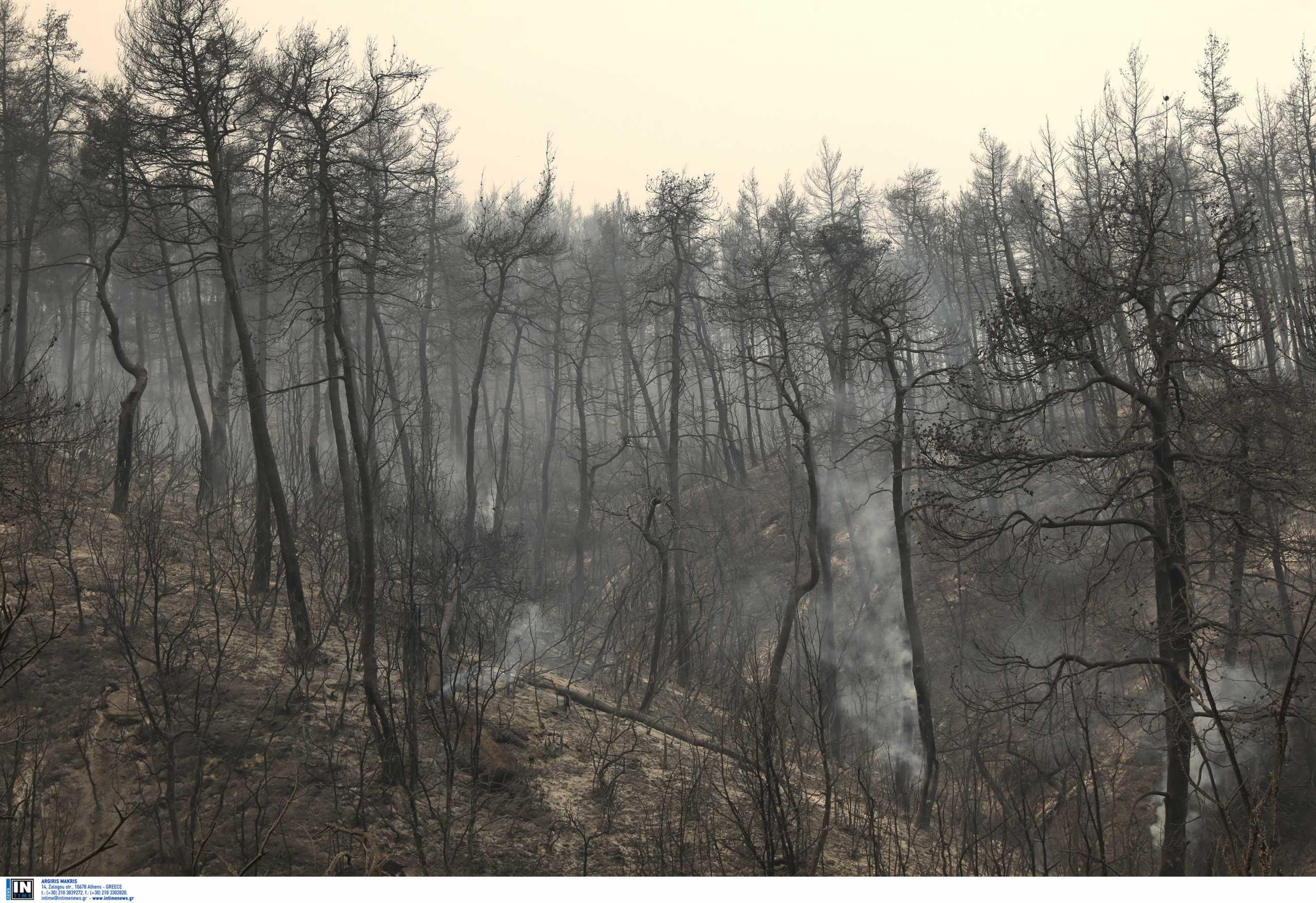 Φωτιές: Κάηκαν 9.000 μελισσοσμήνη και χάθηκαν 10.000 τόνοι πευκόμελου