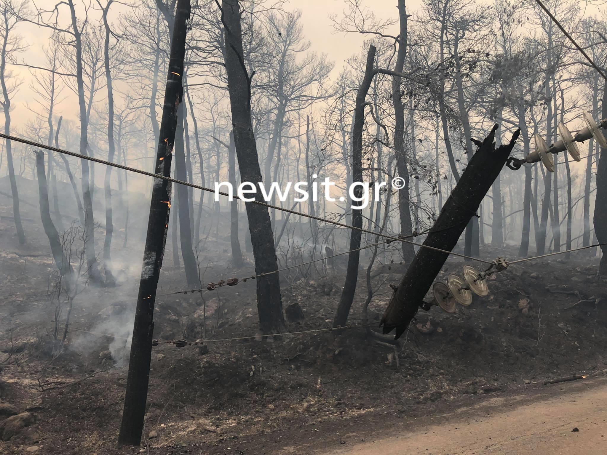 Φωτιά στη Βαρυμπόμπη: Η ΒΙΑΝΕΞ αναλαμβάνει την αναδάσωση της περιοχής
