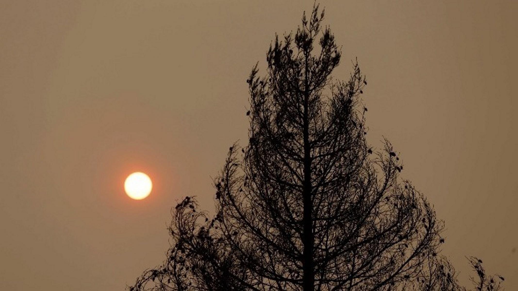 Φωτιά στην Κομοτηνή: Πάνω από 100 στρέμματα δάσους έγιναν στάχτη
