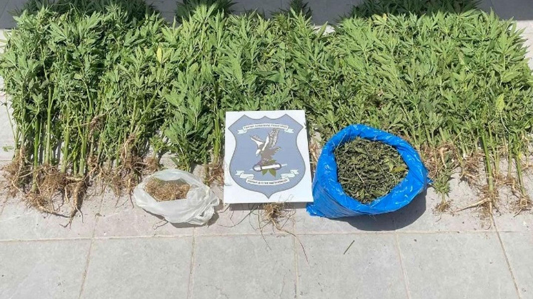 Καστοριά: Πιάστηκαν με 65 κιλά κάνναβη – Πώς έπεσαν στα δίχτυα της αστυνομίας