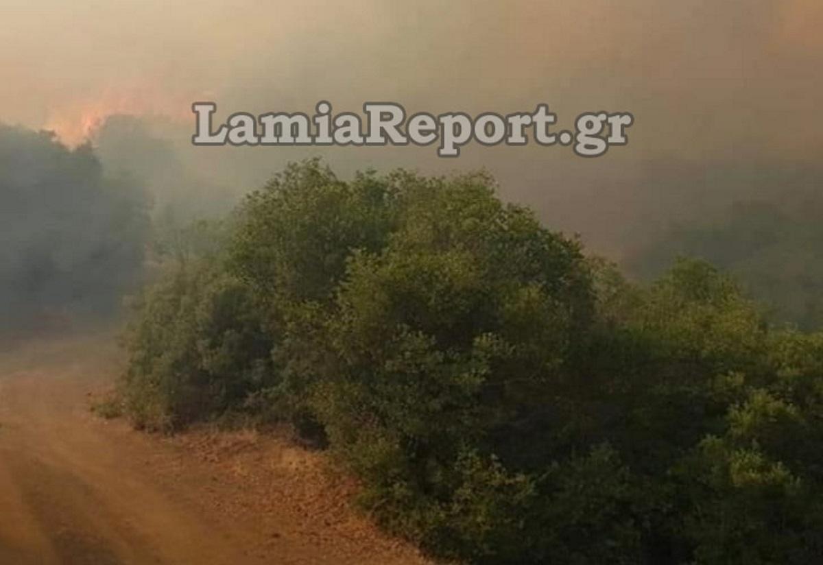 Δύσκολη νύχτα και μάχη με τις φλόγες στο Λογγίτσι Φθιώτιδας