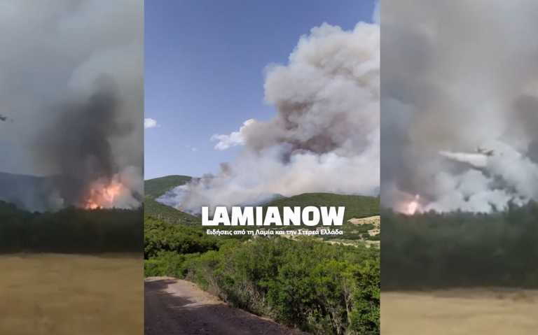 Φωτιά στη Φθιώτιδα: Μάχη με τις φλόγες λίγο πριν πέσει το σκοτάδι