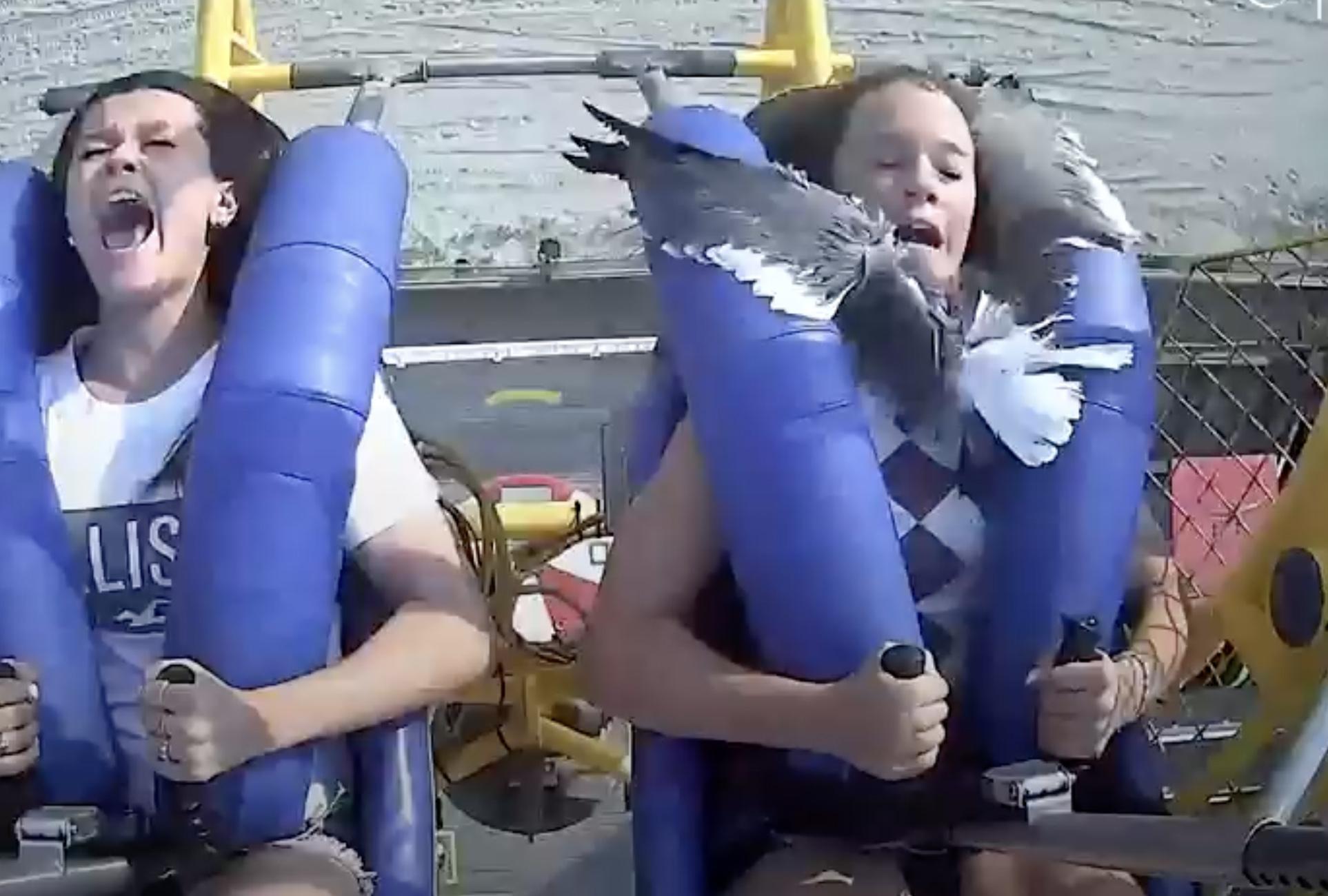 Γλάρος χαστουκίζει έφηβη στο λούνα παρκ