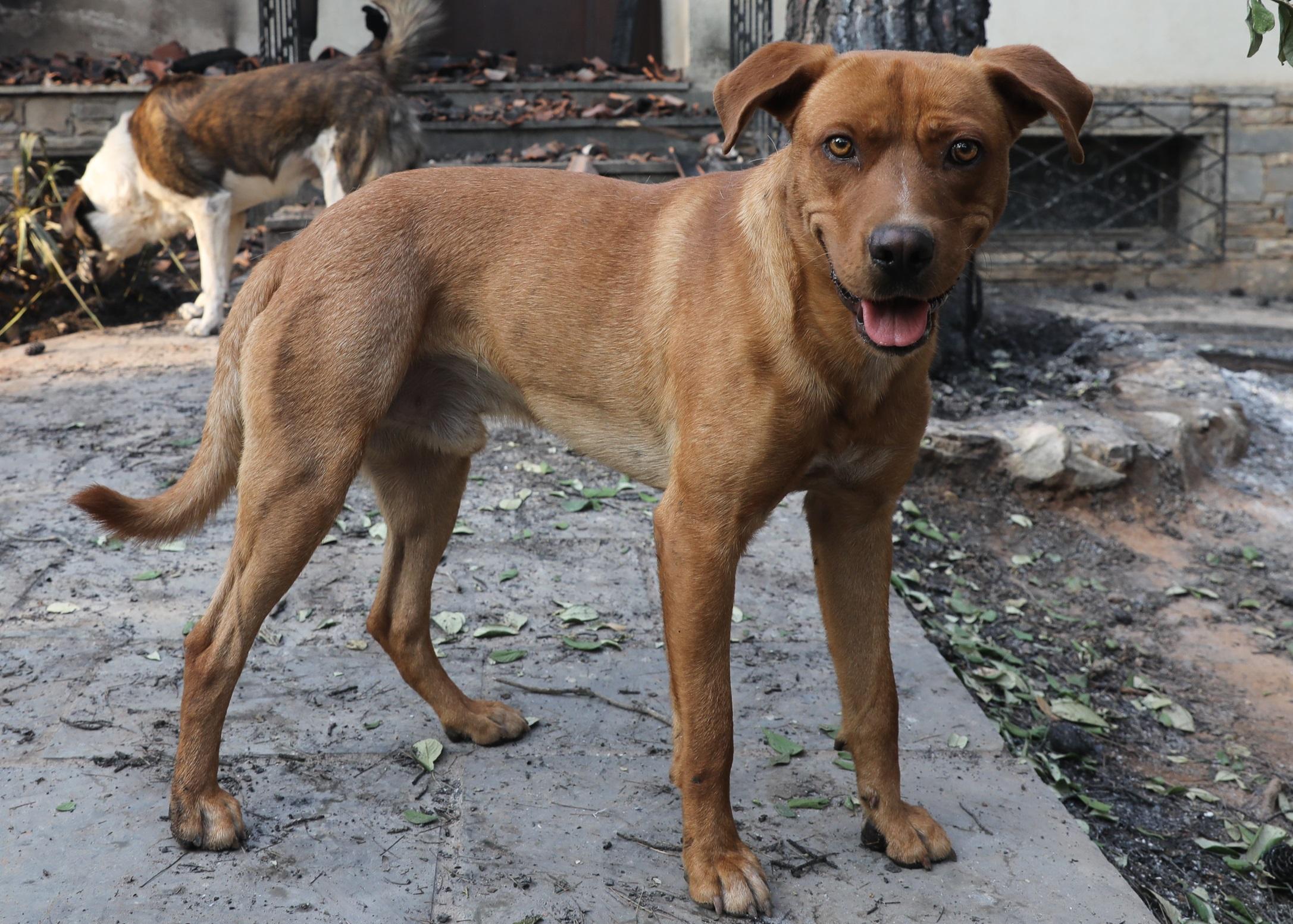 Κτηνωδία στην Κρήτη – Πυροβόλησαν και σκότωσαν σκύλο έξω από το σπίτι του
