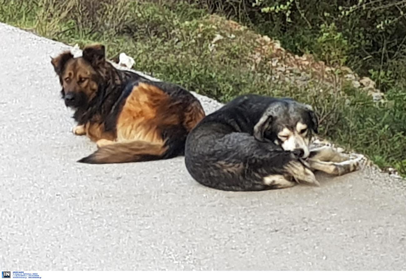 Αυτοί οι σκύλοι των 125.000 δολαρίων εντοπίζουν τον κίνδυνο πριν συμβεί