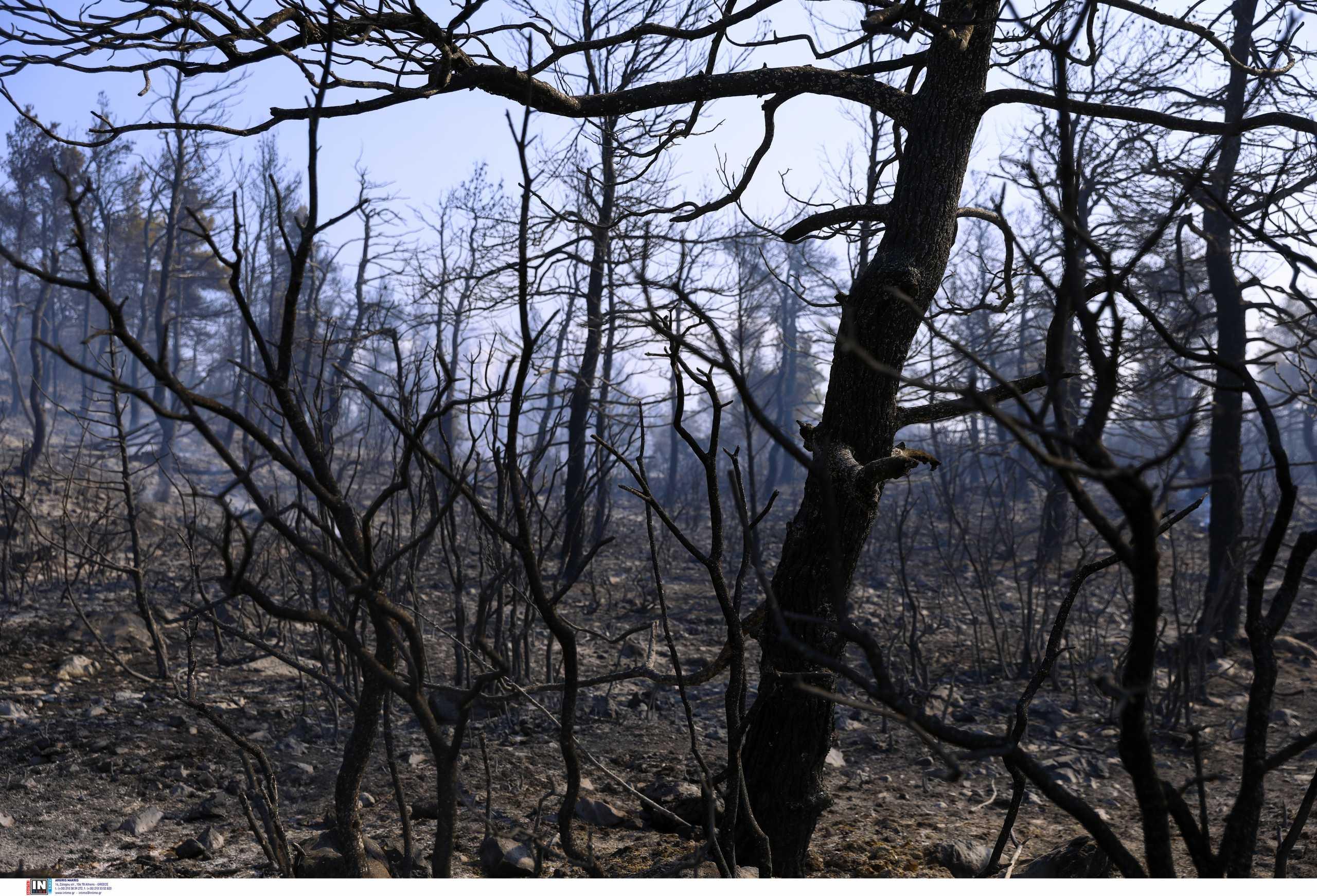 Πυροσβεστική: Οριοθετήθηκε η φωτιά στα Βίλια