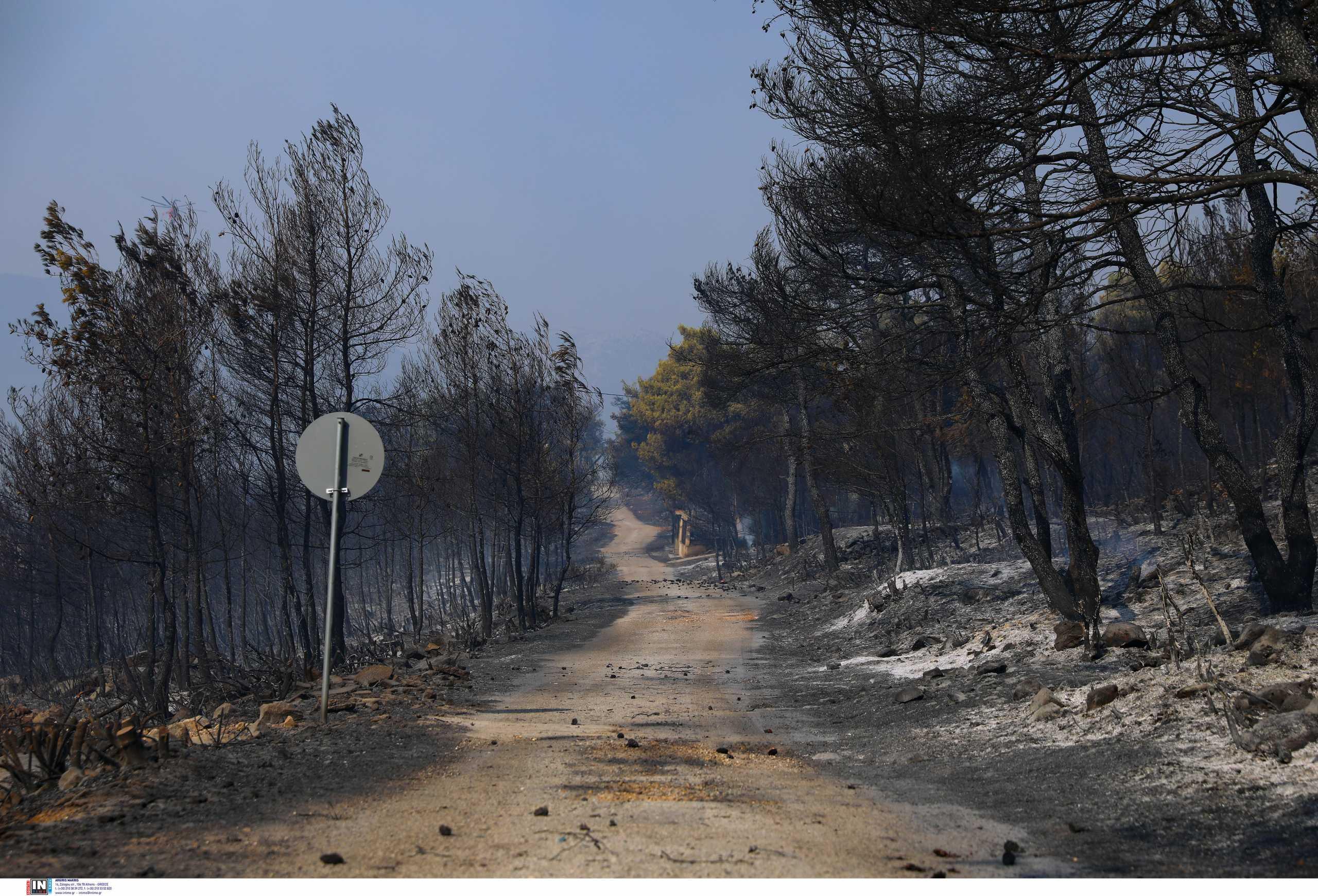 Φωτιά στα Βίλια: Στάχτη 94.000 στρέμματα – Άλλα 5.317 κάηκαν στην Κερατέα