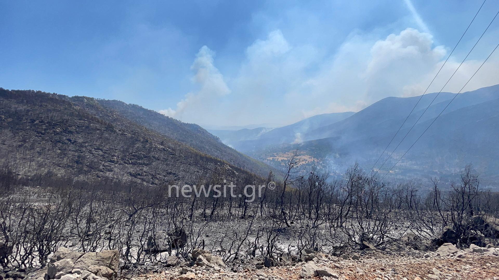 Φωτιά στα Βίλια: Από ένα κούτσουρο πεύκου ξεκίνησαν όλα – Οι πρώτες εικόνες από την καταστροφή