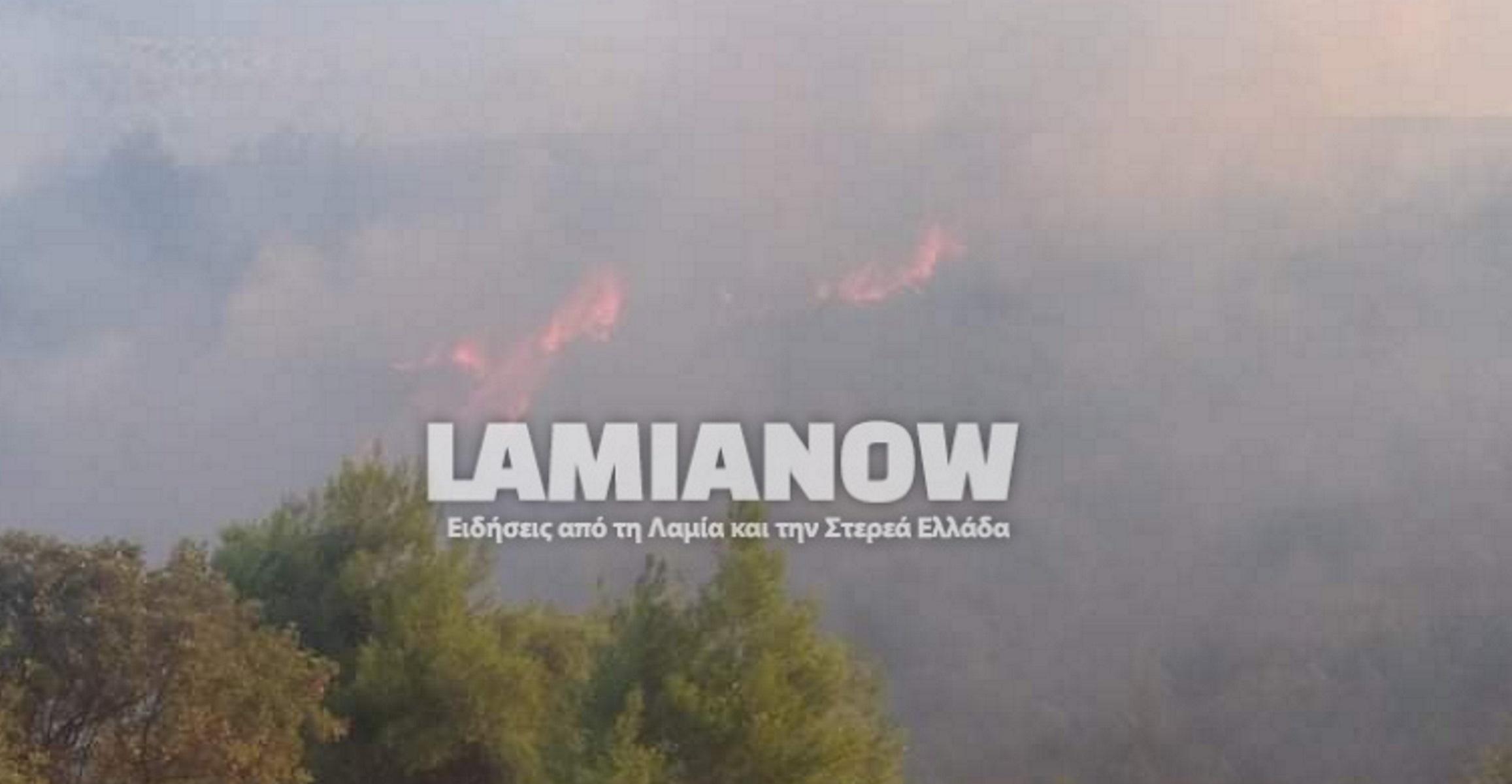 Φωτιά στην Αταλάντη – Συναγερμός στην πυροσβεστική