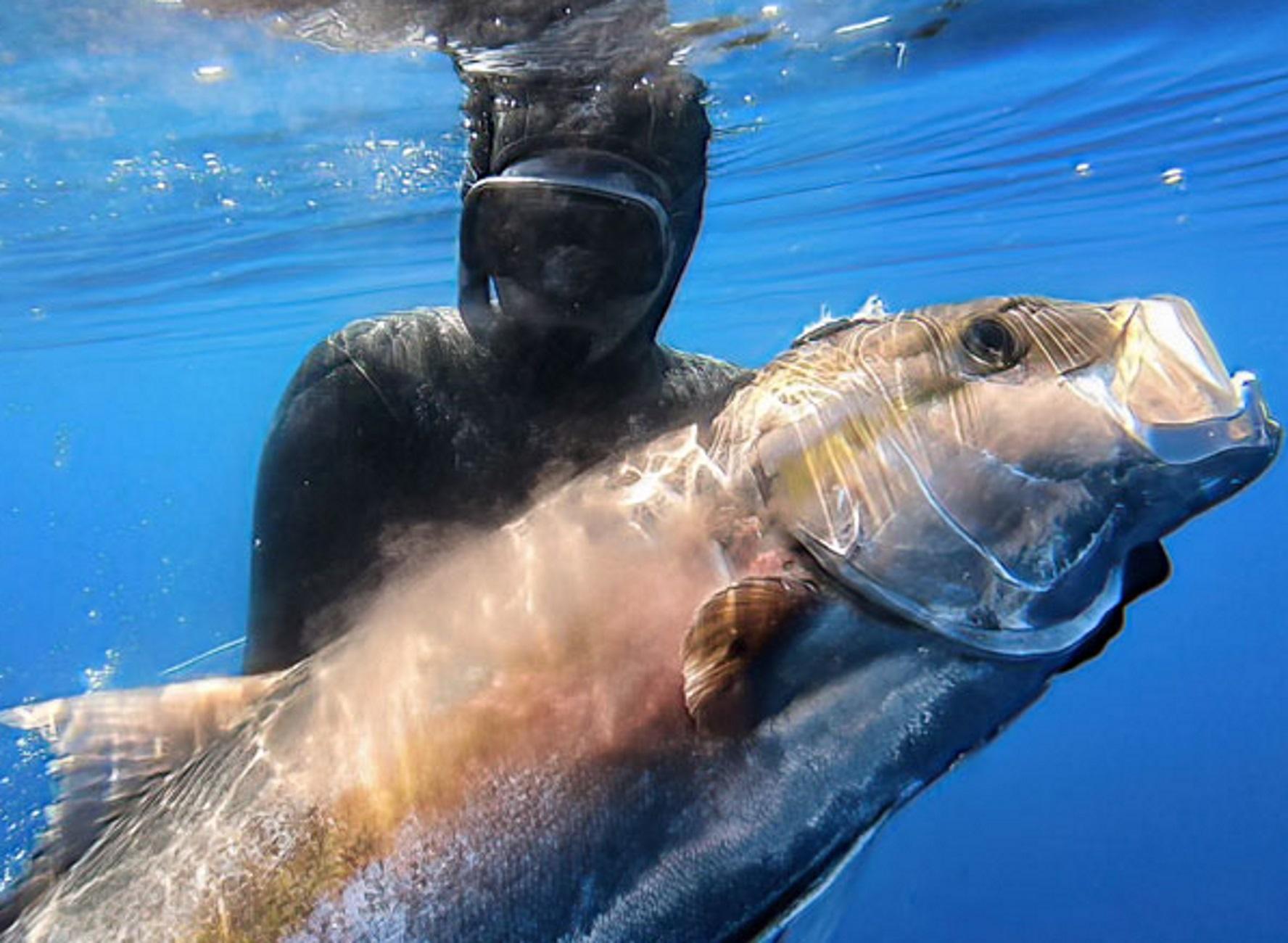 Αιγαίο: Η βολή και η ψαριά της ζωής τους – Το τεράστιο μαγιάτικο και η διπλή προσπάθεια