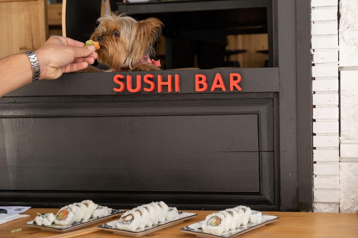 Εστιατόριο σερβίρει σούσι για σκύλους στη Θεσσαλονίκη