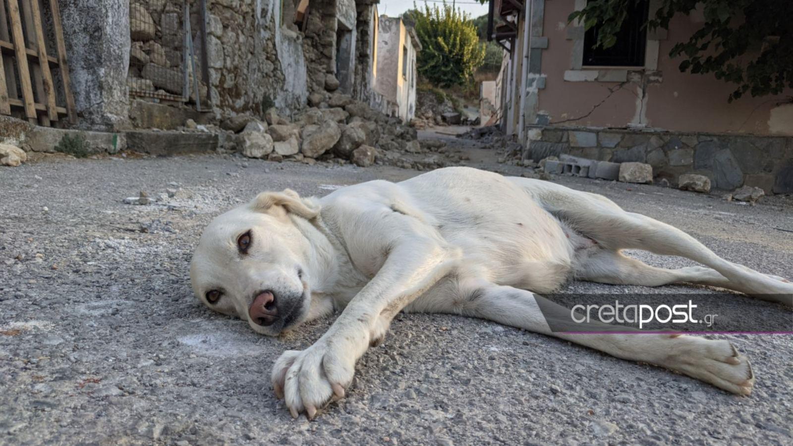 Σεισμός στην Κρήτη – Χουμέρι: Ένας σκύλος τριγυρνά μόνος στο «βομβαρδισμένο» χωριό