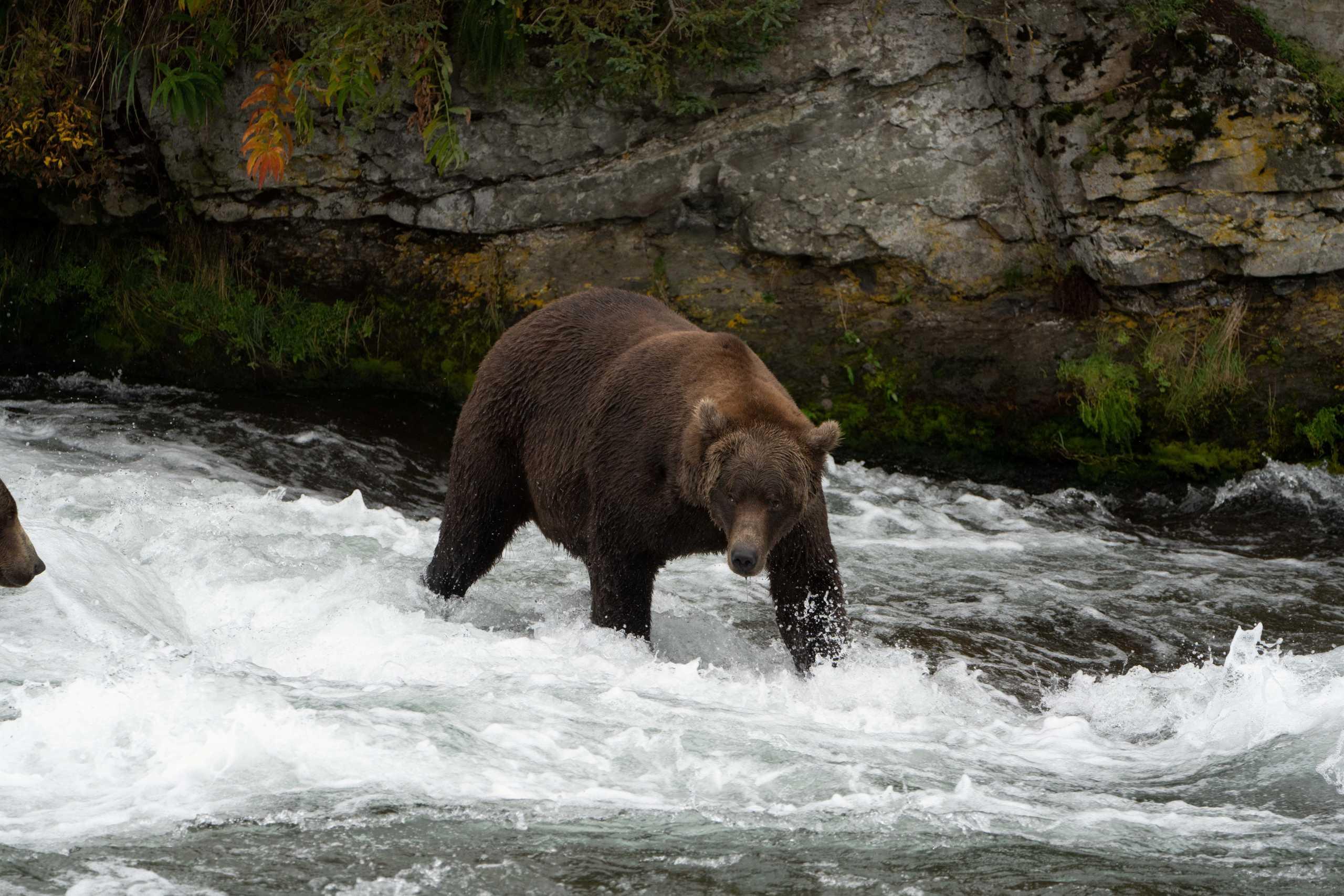 Ιαπωνία: Με ροκ μουσική αντιμετωπίζουν τις επιθέσεις από αρκούδες