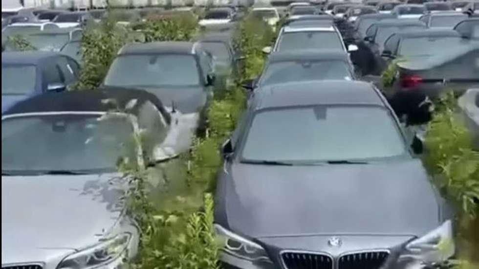 3.000 ολοκαίνουργια BMW και MΙΝΙ σαπίζουν εδώ και 6 χρόνια για ένα περίεργο λόγο! (video)