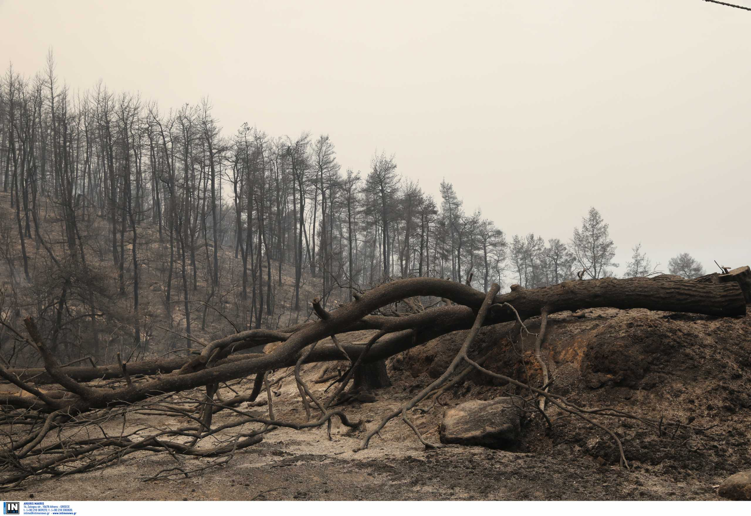 Πυρόπληκτες περιοχές: Αυτά είναι τα μέτρα στήριξης για τους ρητινοκαλλιεργητές των καμμένων