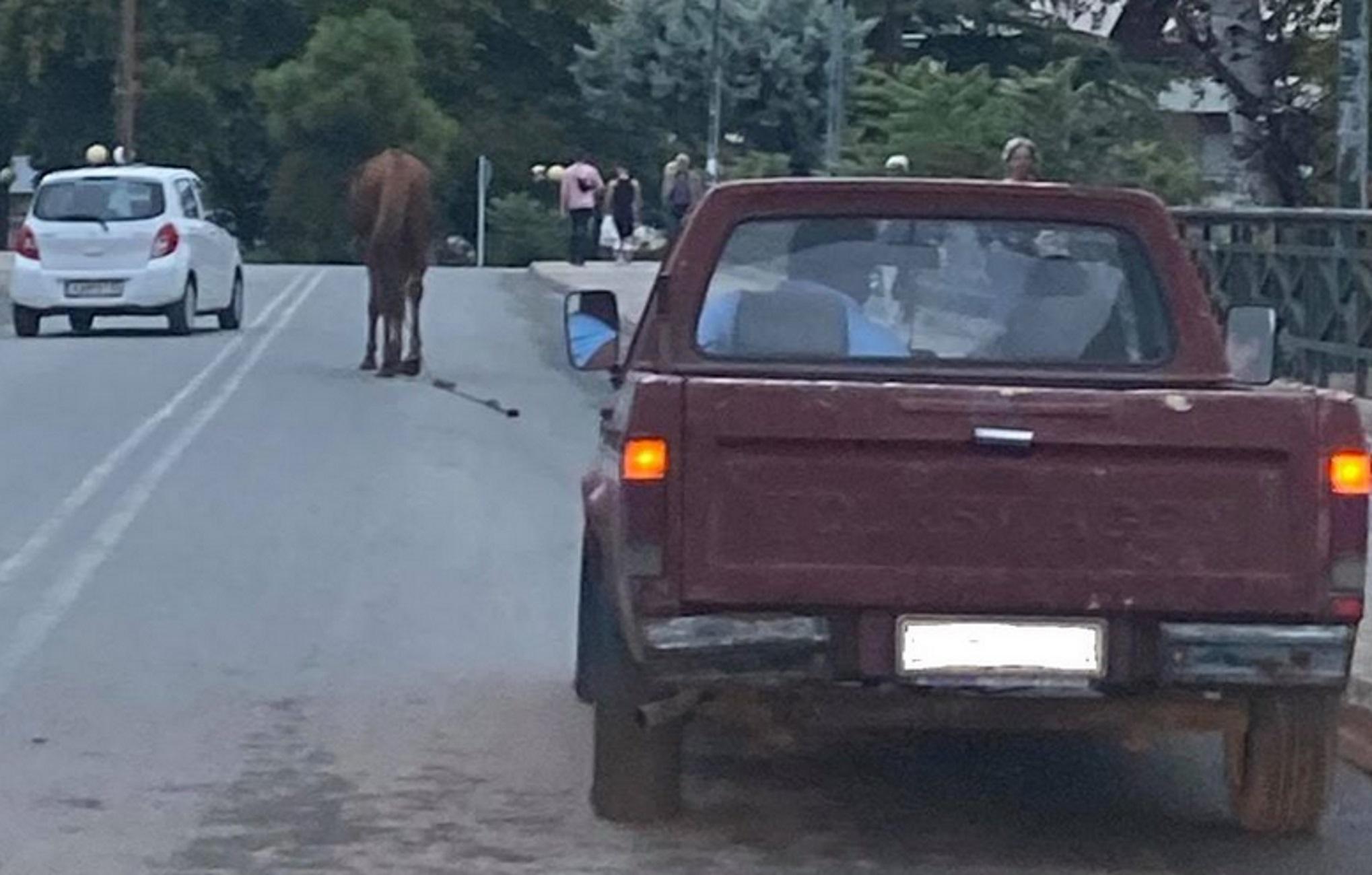 Λάρισα: Με τους ρυθμούς του αλόγου – Δείτε τις εικόνες που τράβηξαν οδηγοί πάνω σε γέφυρα