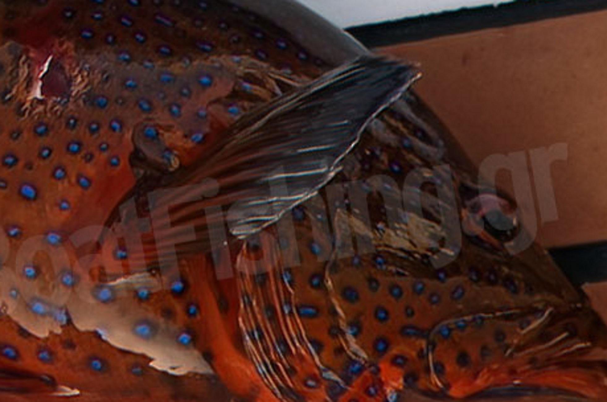 Σαρωνικός: Ψαροντουφεκάς βγήκε από τη θάλασσα με αυτό το ψάρι – Οι εικόνες που έγιναν θέμα συζήτησης