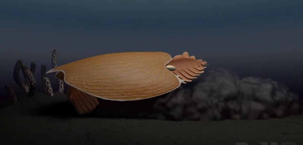 Ανακαλύφθηκε θαλάσσιο τέρας με κεφάλι σαν κράνος – Έζησε πριν από 500 εκατομμύρια χρόνια
