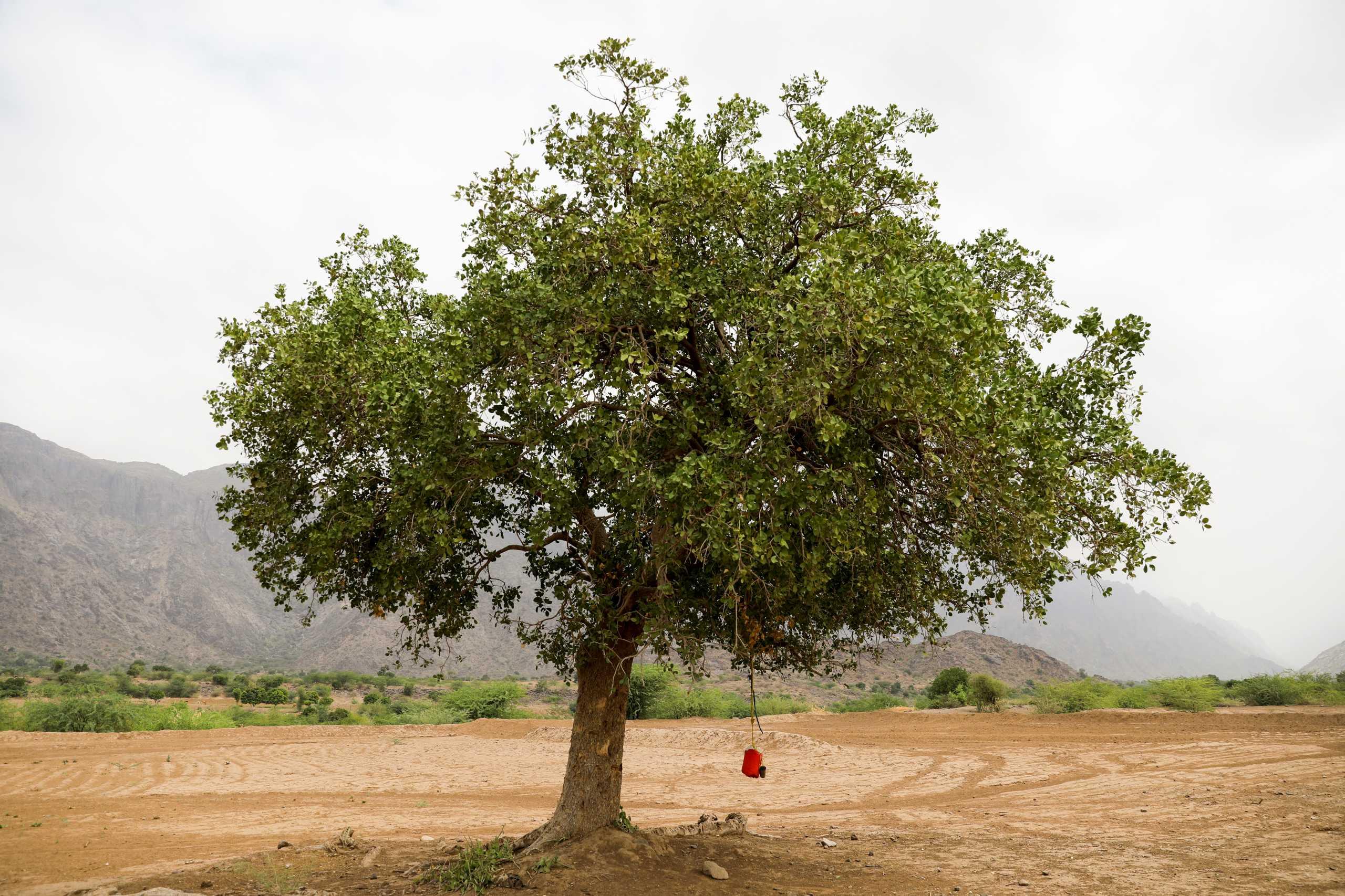 Είδος προς εξαφάνιση και τα δέντρα: Ένα στα τρία κινδυνεύουν